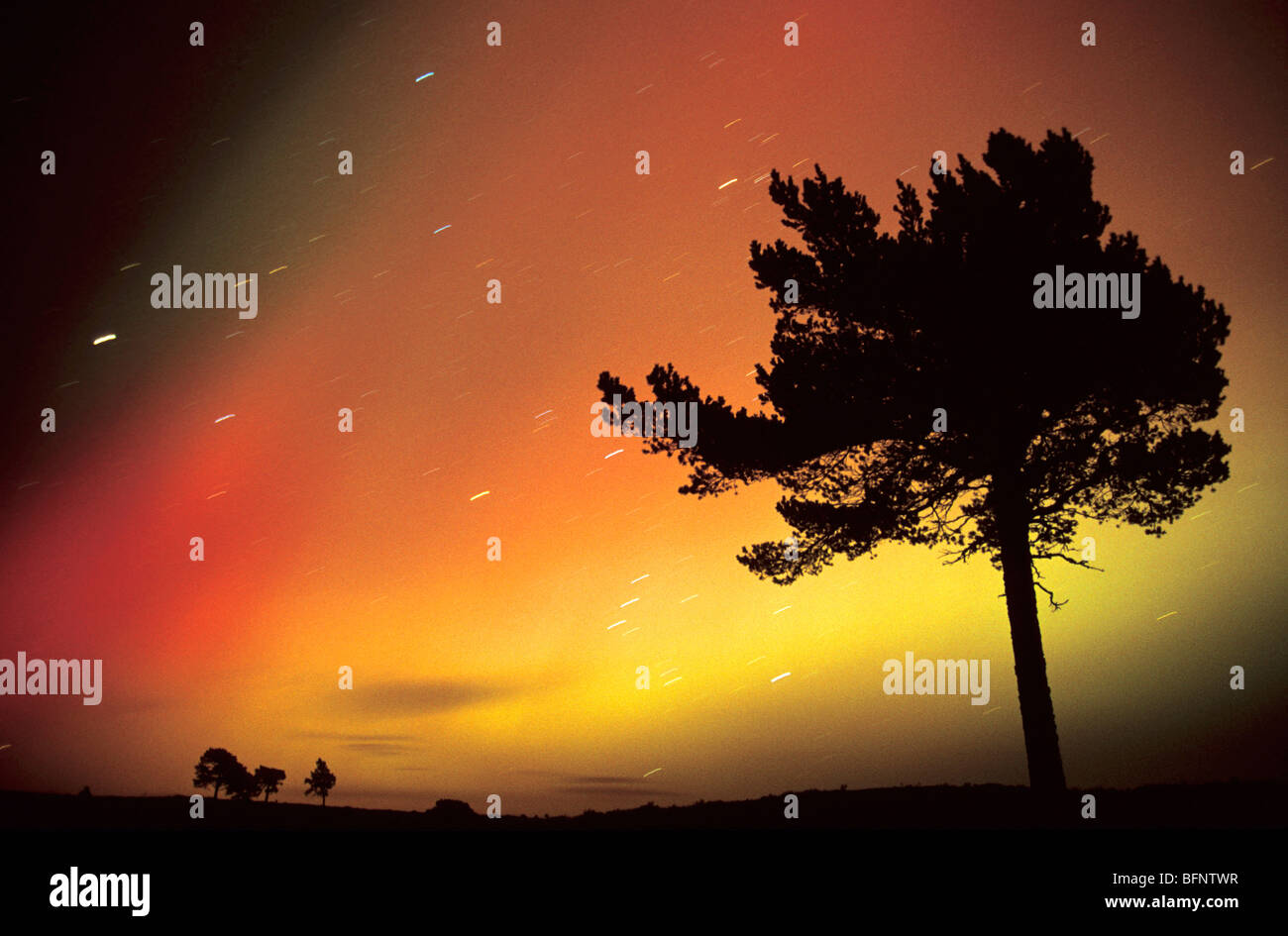 Aurora Borealis and Scots Pine, Scotland. Stock Photo