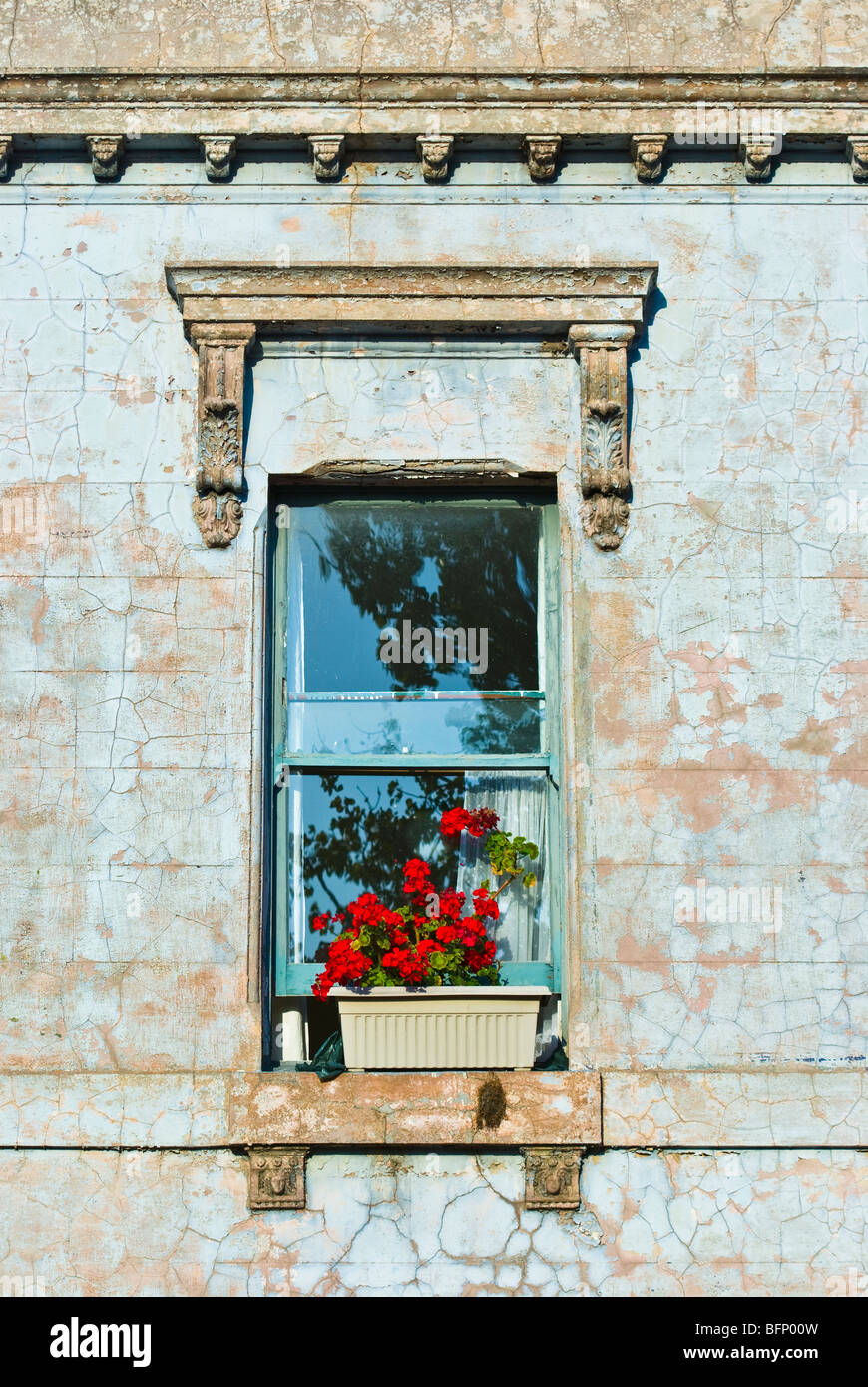 A flower box with bright red Geranium flowers rests on a windowsill. - Stock Image