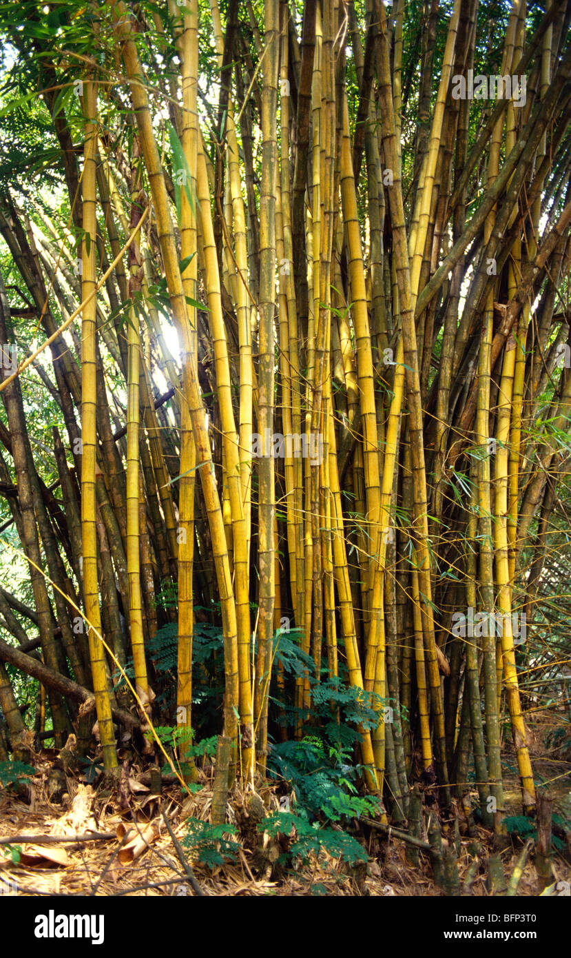 NMK 63407 : Bamboo trees in Zoological Park