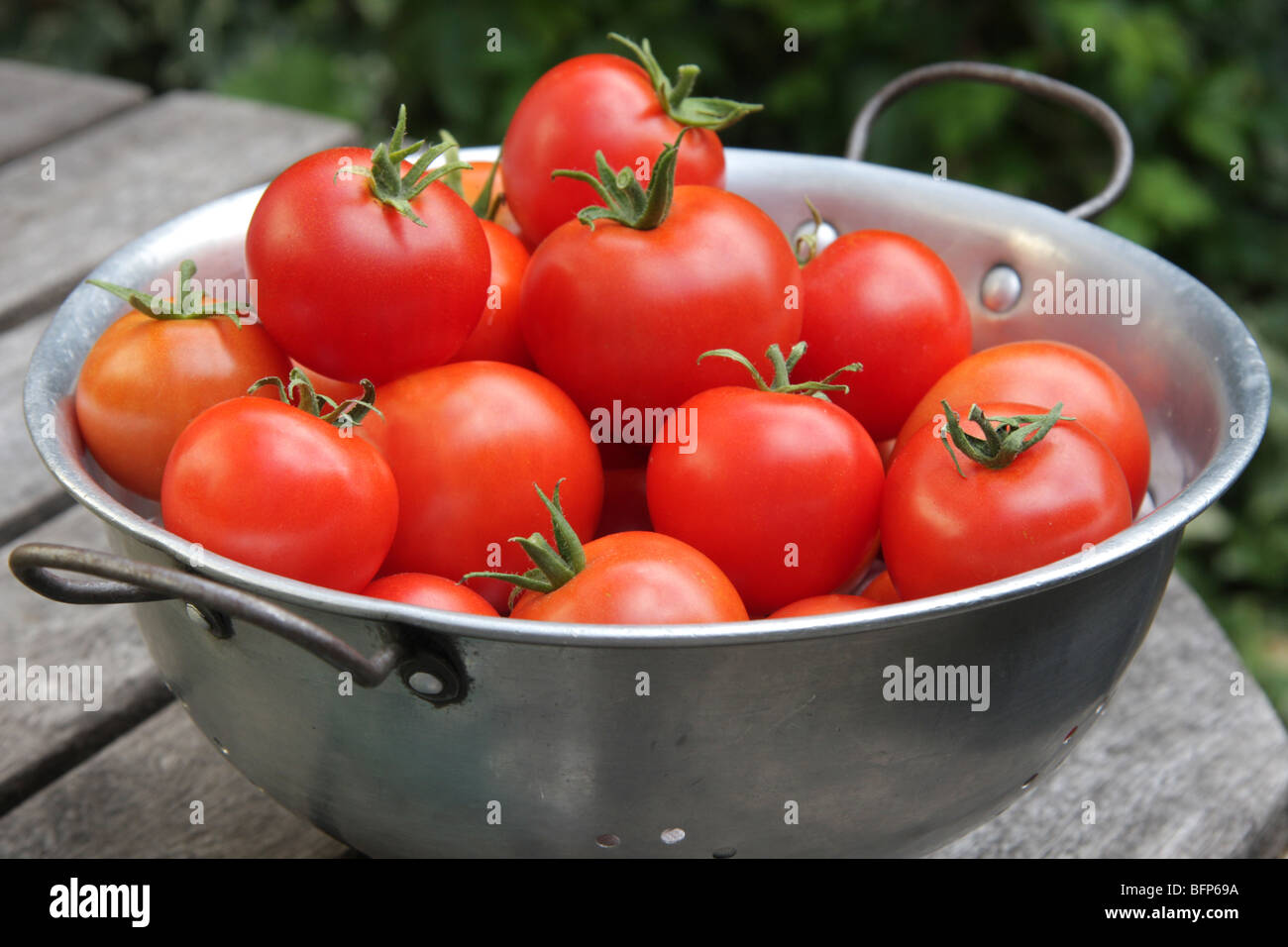 A pile of Organic tomatoes from the garden - Stock Image