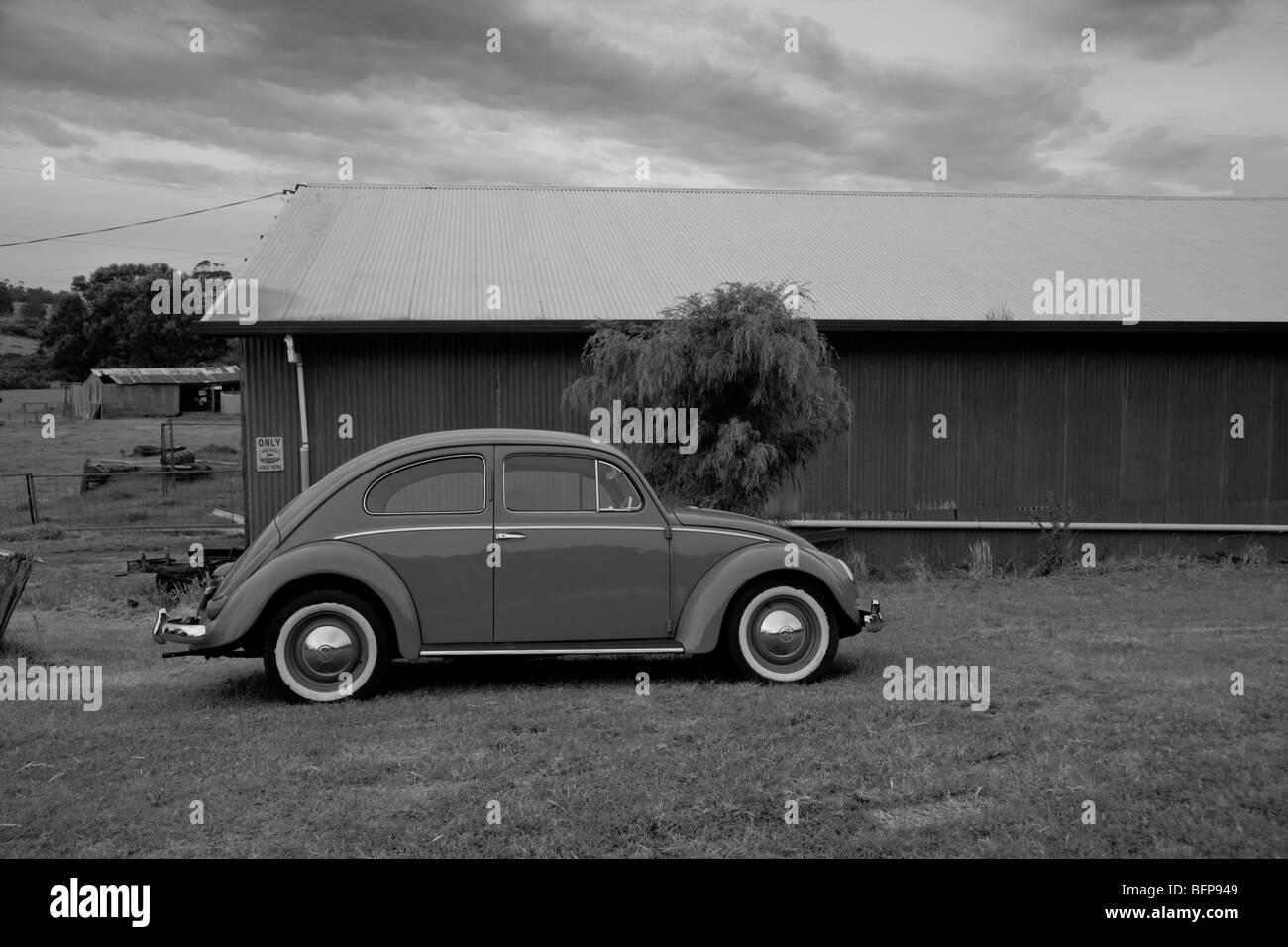1954 Volkswagen Beetle, Western Australia - Stock Image