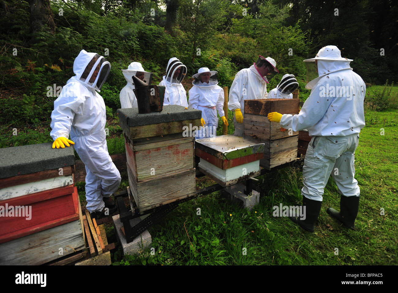 bee keepers meeting and working with bees and bee hives on a farm in Dorset - Stock Image