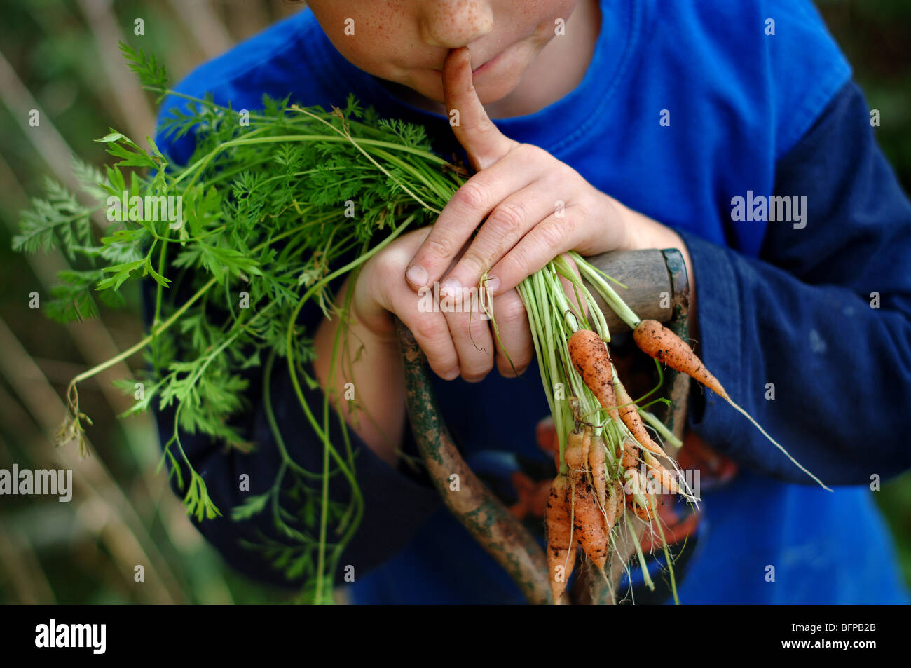 a young boy with freshly picked home grown carrots in a vegetable patch in Devon. - Stock Image