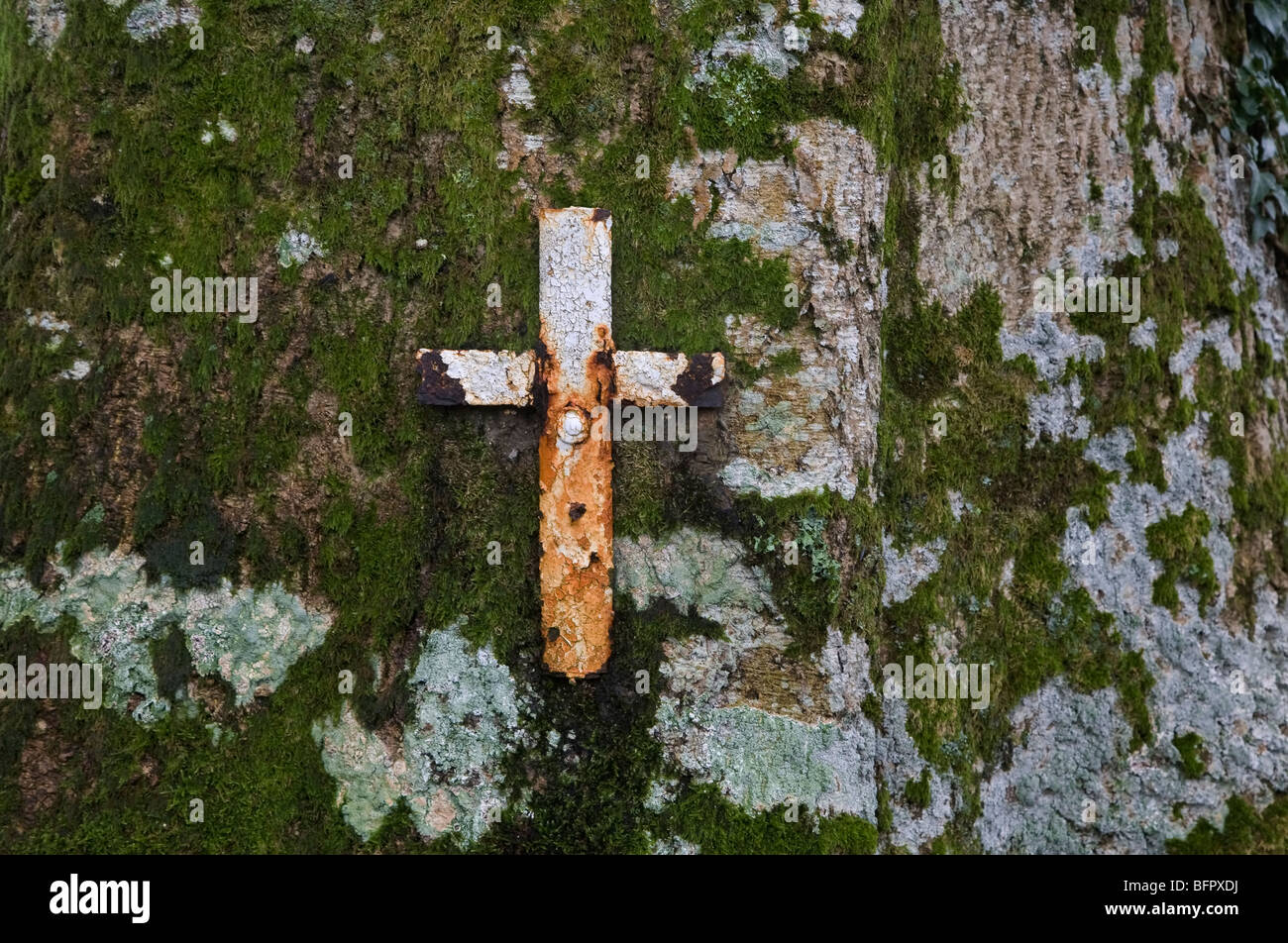 Cross Nailed into Mossy Tree at St Mullins Holy Well, County Kilkenny, Ireland - Stock Image