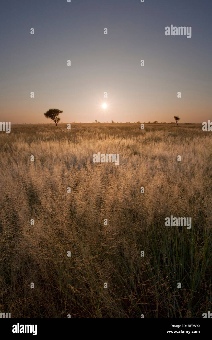 Landscape with sunrise over long grass - Stock Image