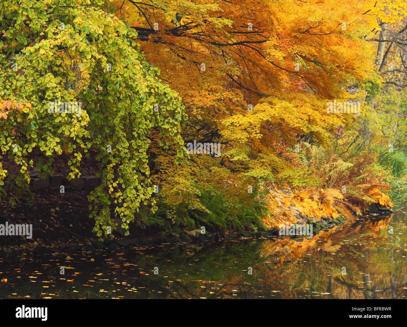 Wroclaw autumn fall colors botanical garden poland stock photo wroclaw autumn fall colors botanical garden poland publicscrutiny Gallery