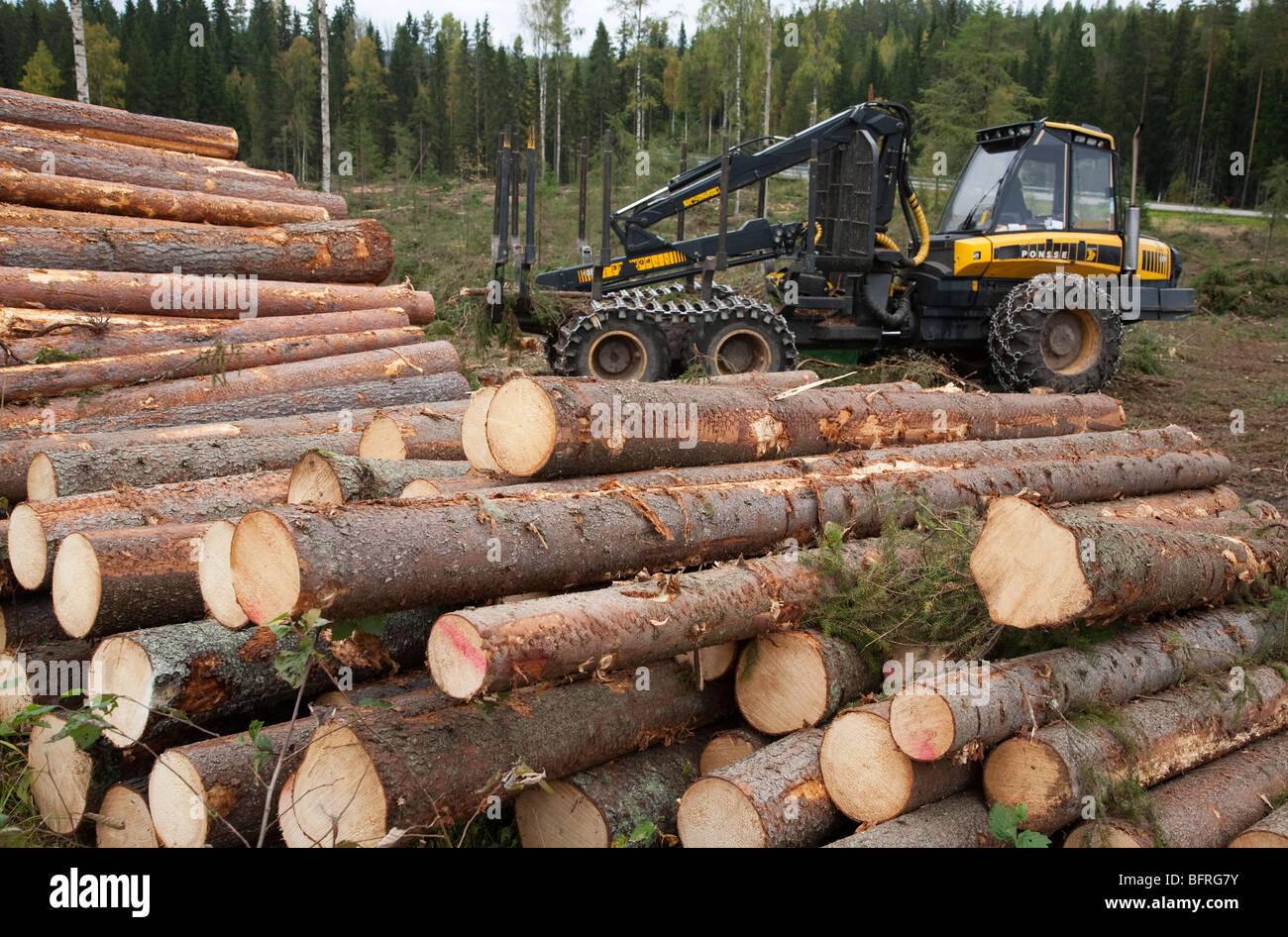 Pile of pine ( pinus sylvestris ) and spruce ( picea abies ) logs and Finnish Ponsse Elk forwarder , Finland - Stock Image