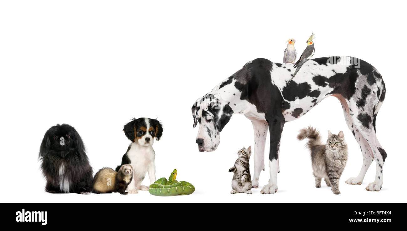 Group of pets in front of white background, studio shot - Stock Image