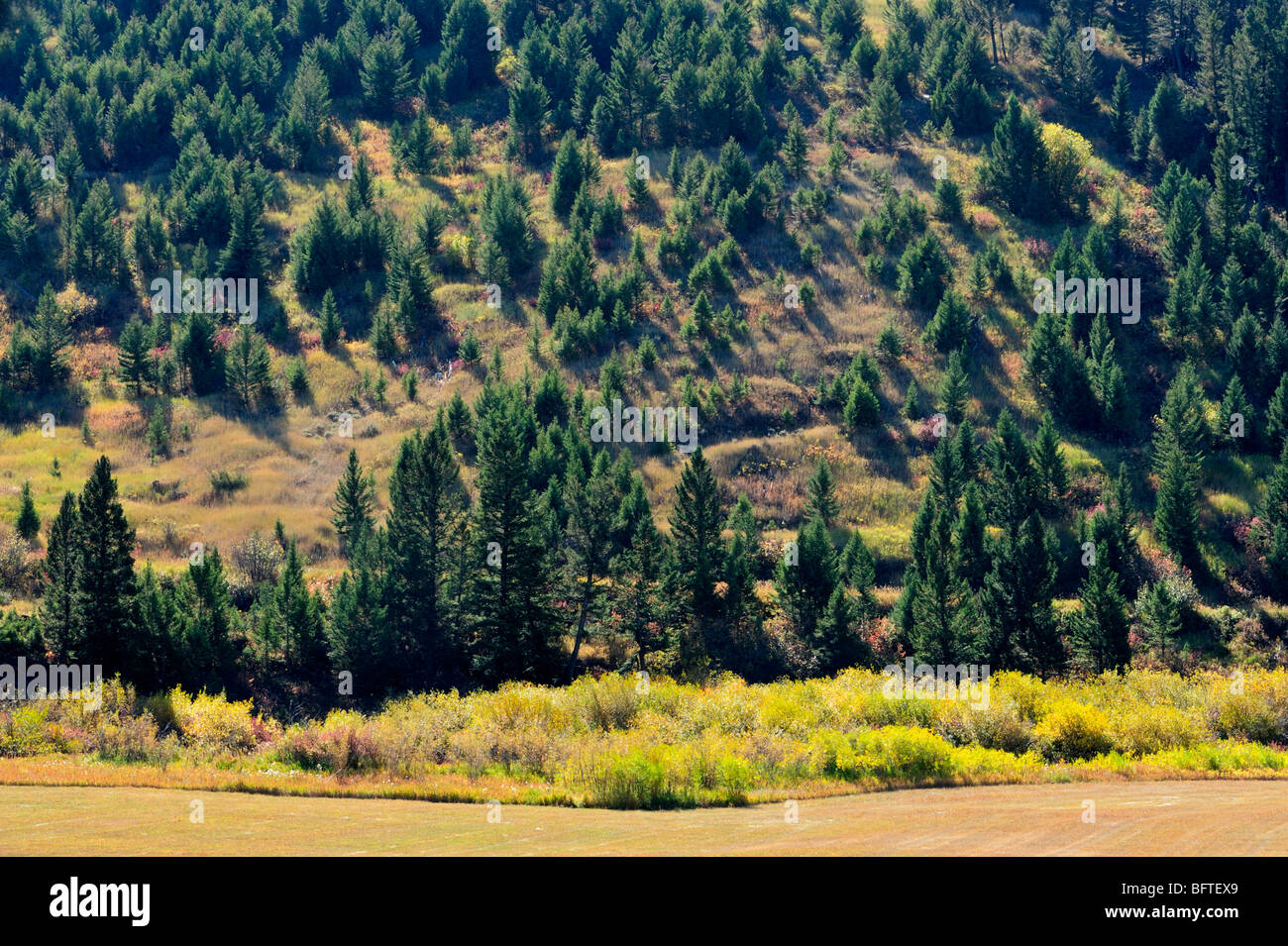 Mountain slope with conifers overlooking pastureland, Bozeman, Montana, USA - Stock Image
