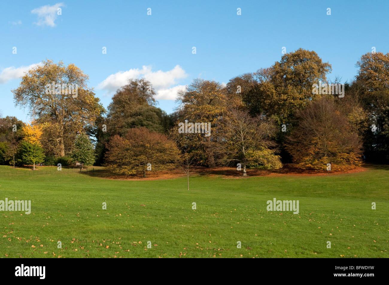 Autumn colours on trees at Kenwood on Hampstead Heath, Highgate, London, UK - Stock Image