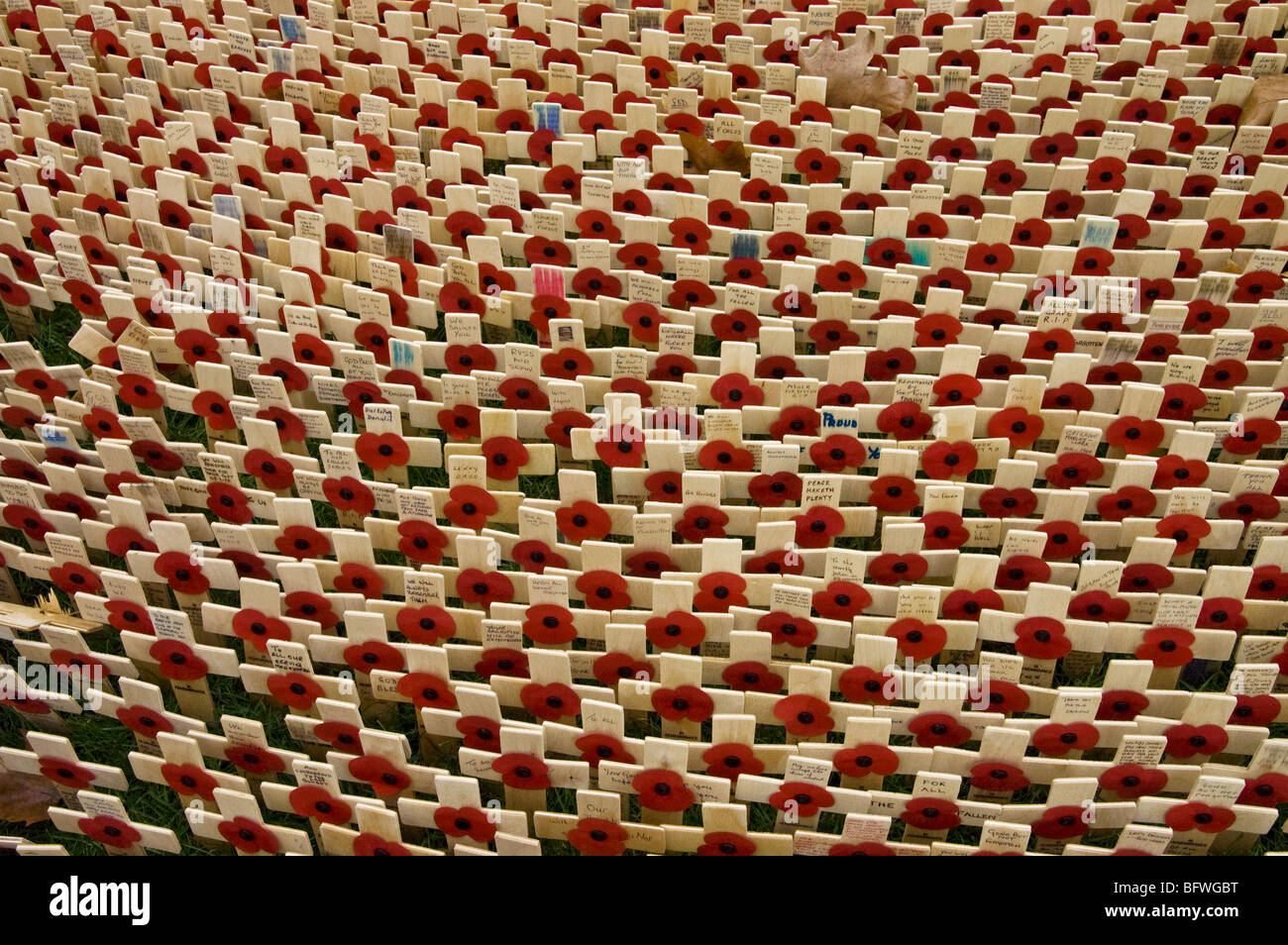 Field of Remembrance, poppies and crosses out side Westminster Abbey. - Stock Image