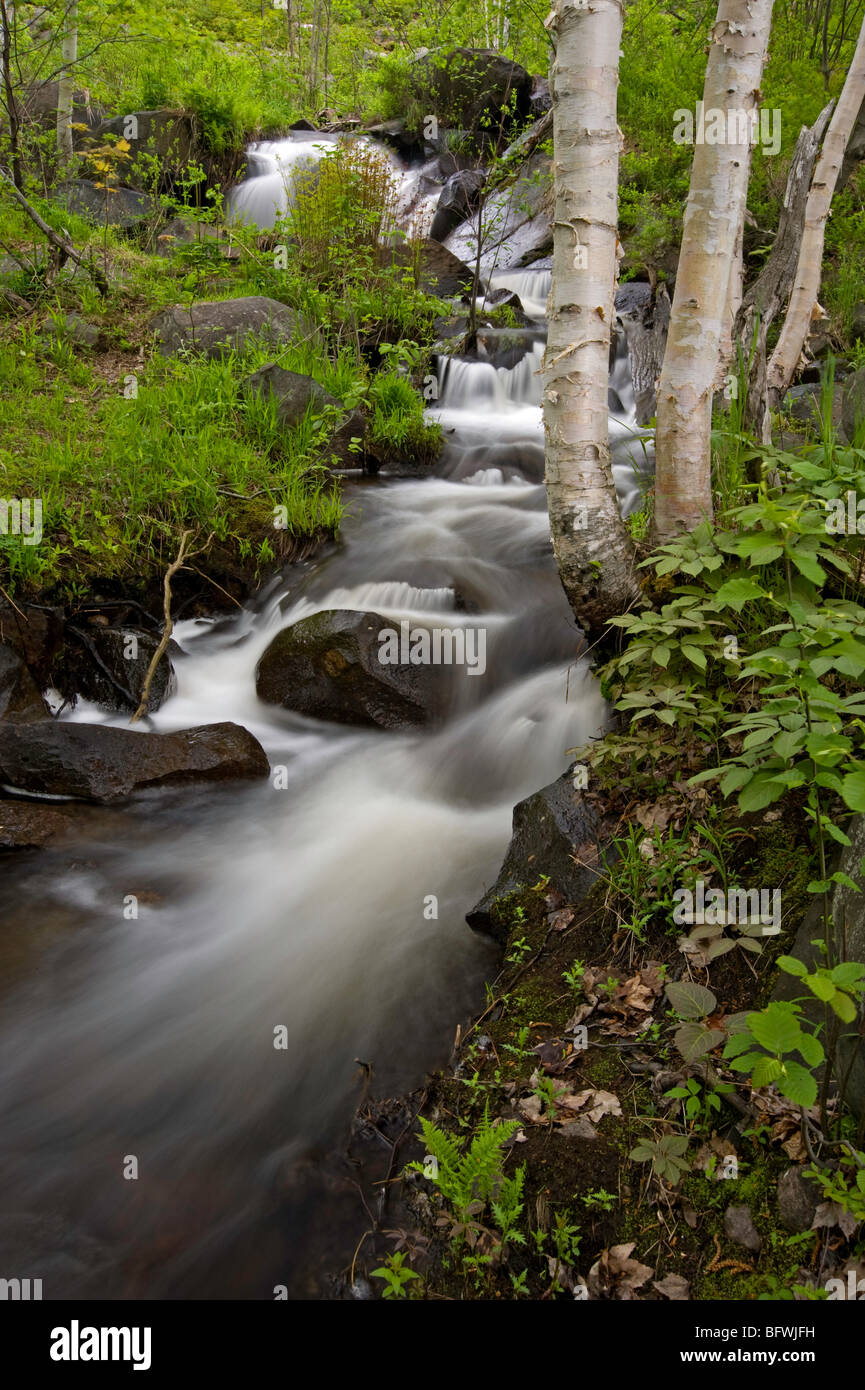 Tributary waterfall in Onaping River with birch trees, Greater Sudbury, Ontario, Canada - Stock Image