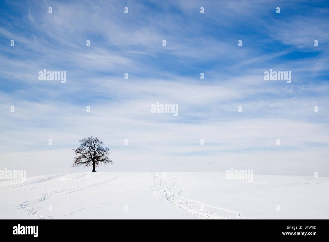 oak tree on snowy hill in winter - Stock Image