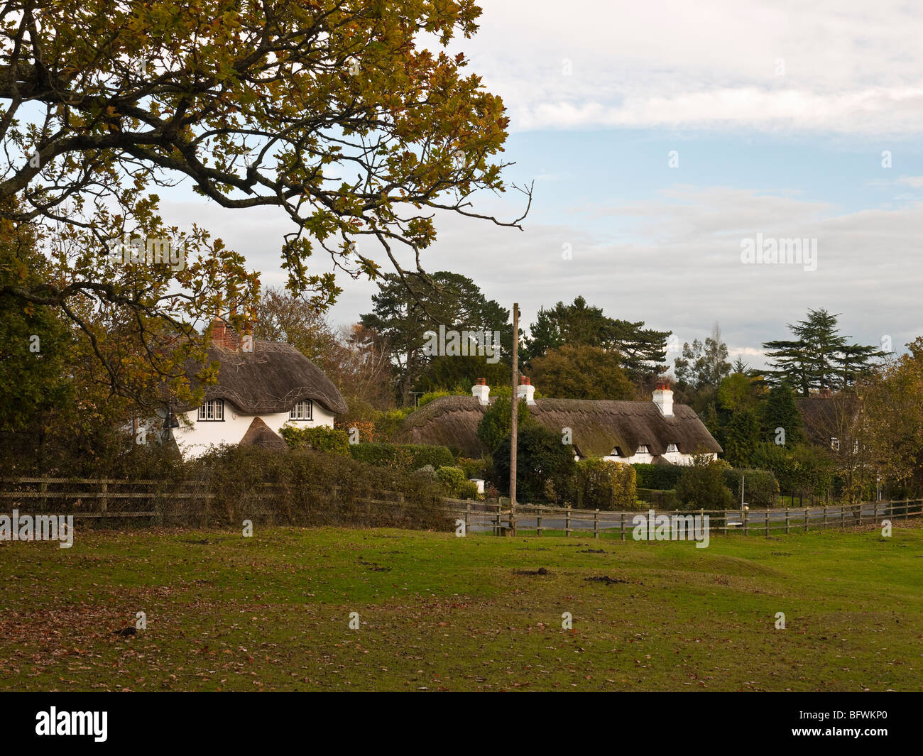 Swan Green New Forest Hampshire UK - Stock Image