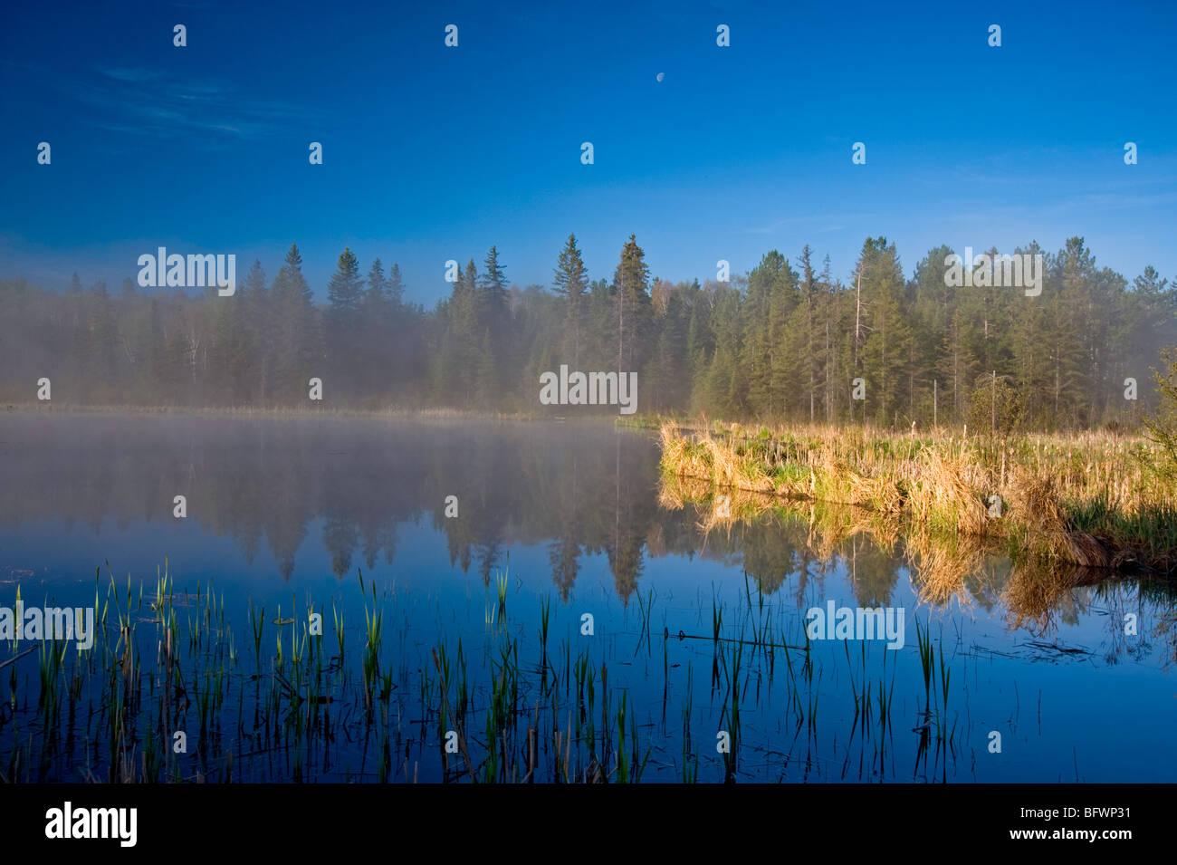 Morning mists in beaver pond, Greater Sudbury, Ontario, Canada - Stock Image