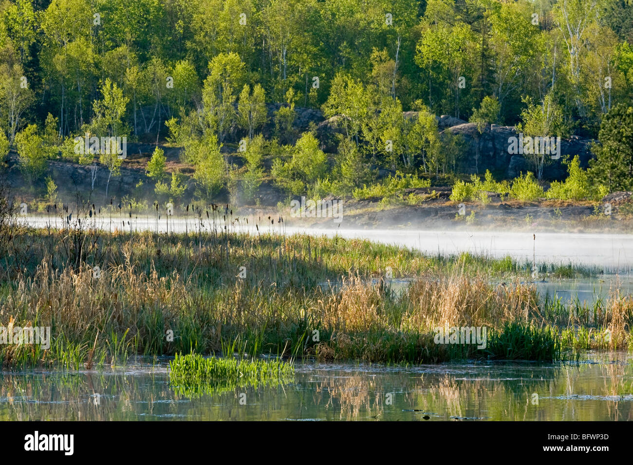 Morning mists in spring beaver pond, Greater Sudbury, Ontario, Canada - Stock Image