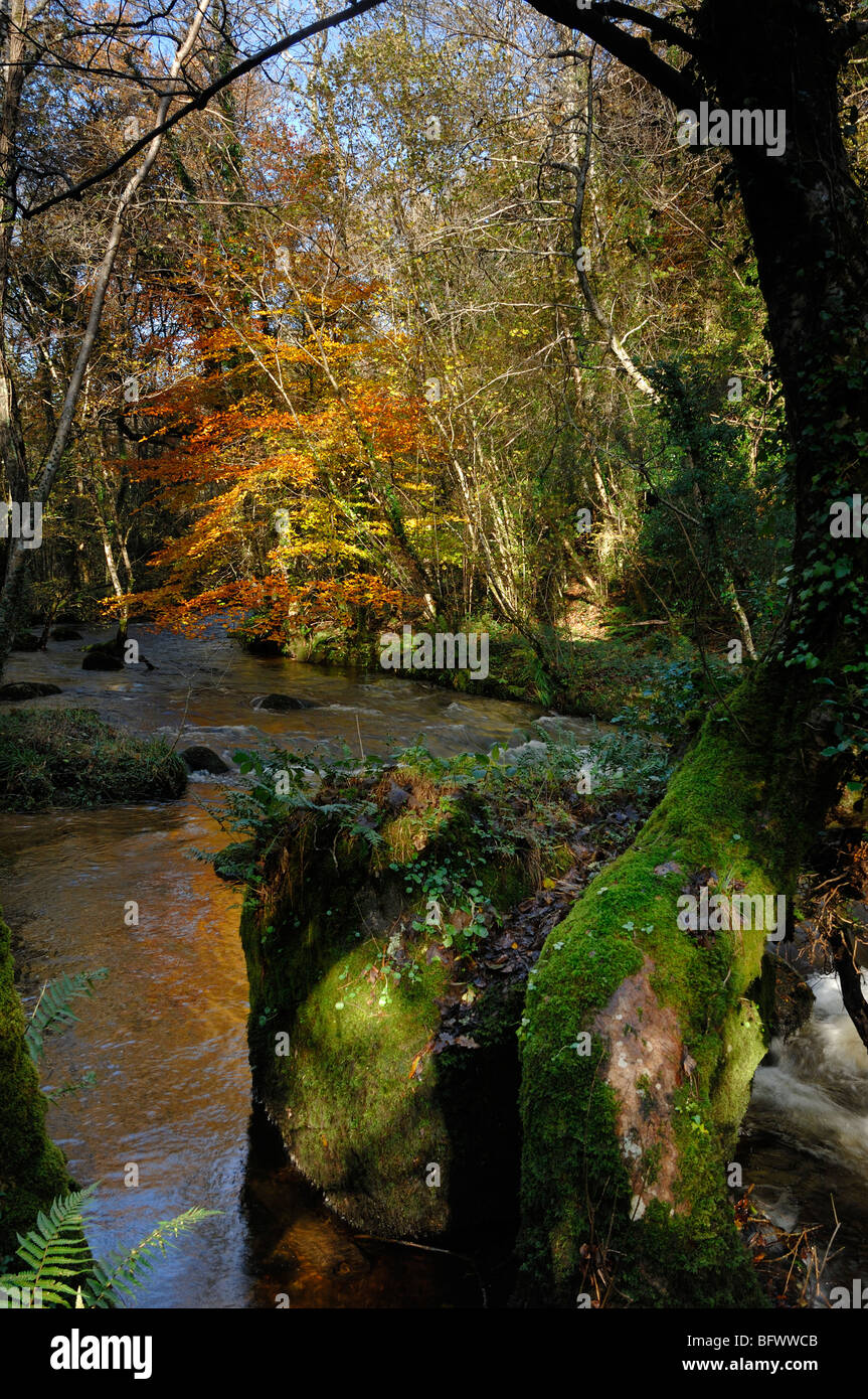 Pullerbrook Woods and the river bovey in the Bovey Valley Dartmoor National Park Devon England - Stock Image