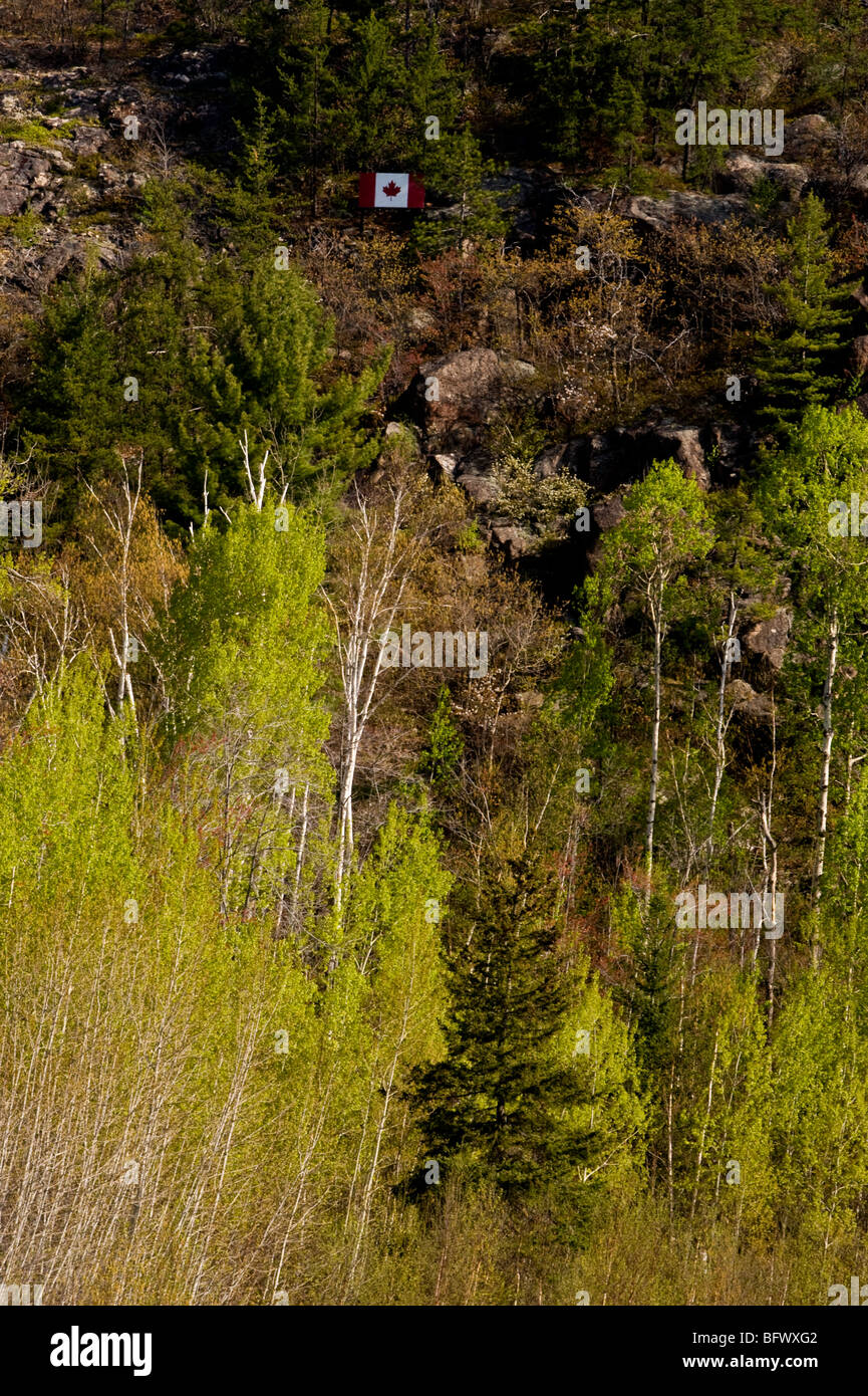 Aspens with emerging foliage at base of cliff with Canadian Flag, Greater Sudbury, Ontario, Canada Stock Photo
