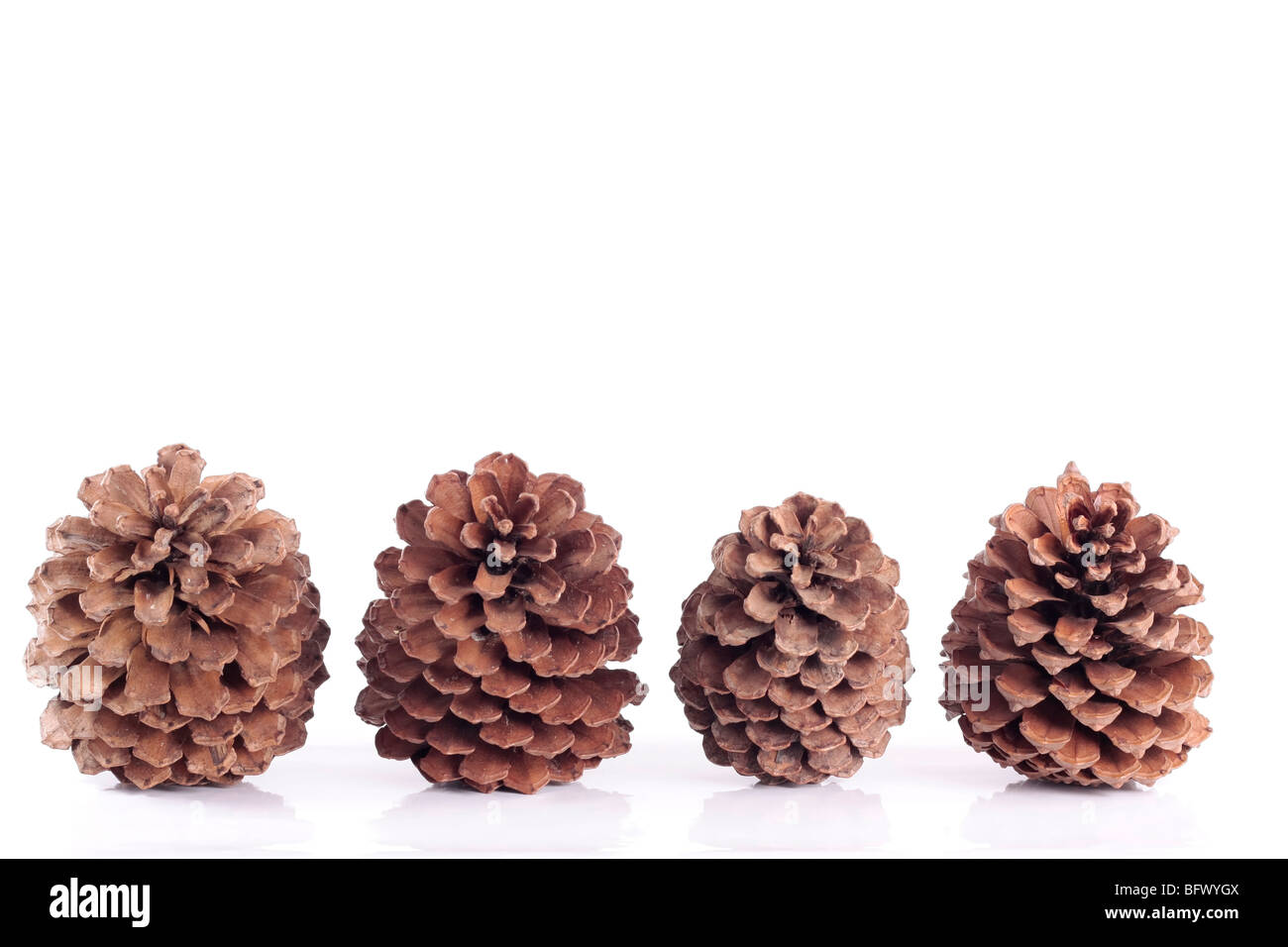 Pinecones background isolated over white - Stock Image