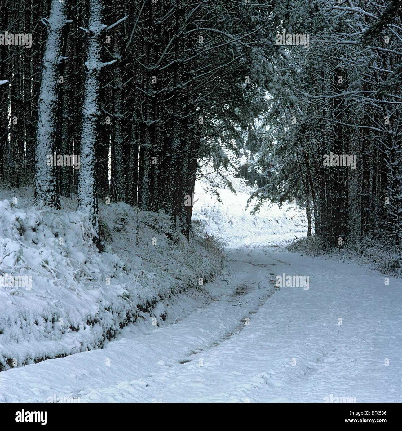 Taiga in deep autumn Krasnogorskoe village Altai Siberia Russia - Stock Image