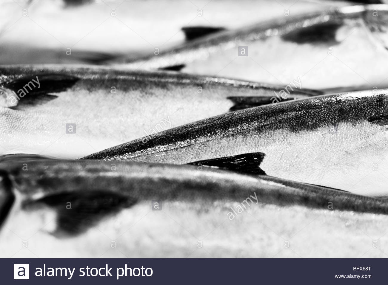 raw fish on ice - Stock Image