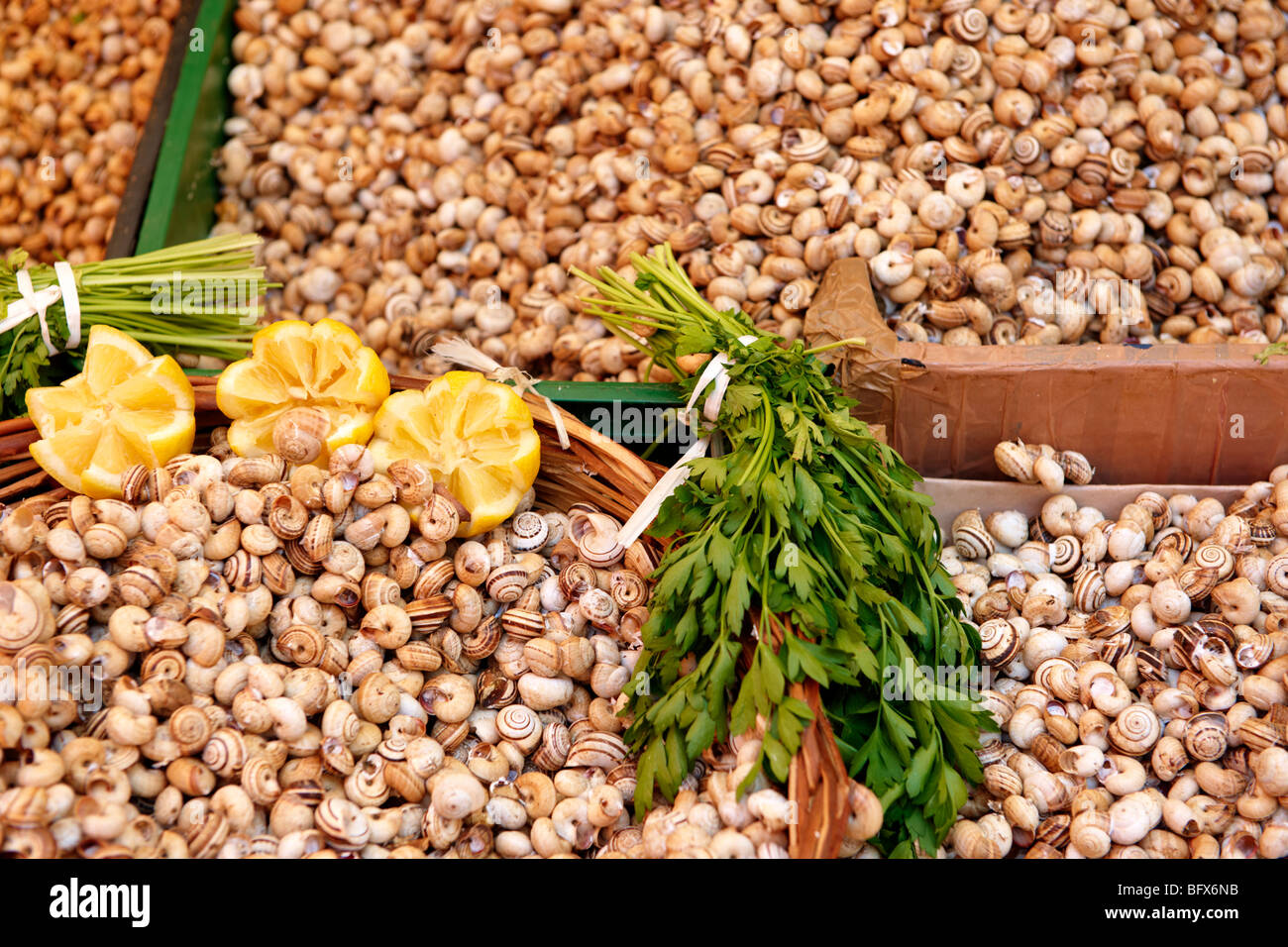Live edible snails, Palermo food market, Sicily Stock Photo