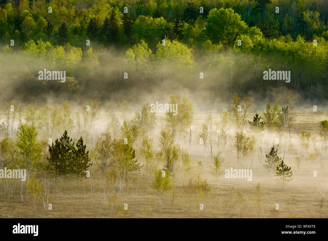 Spring forests on hillsides with morning mists in valley bog, Greater Sudbury, Ontario, Canada - Stock Image