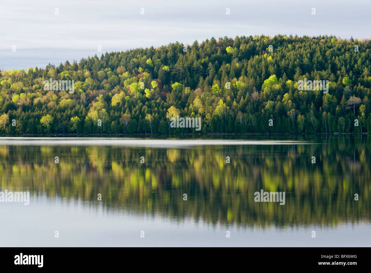 Spring forest reflected in Simon Lake, Greater Sudbury, Ontario, Canada - Stock Image