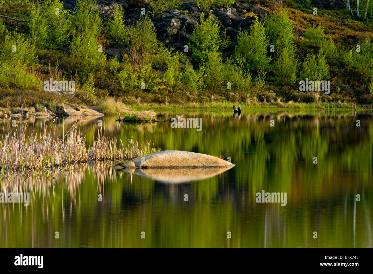 Rock outcrops and early spring foliage colour reflected in beaver pond, Greater Sudbury, Ontario, Canada - Stock Image
