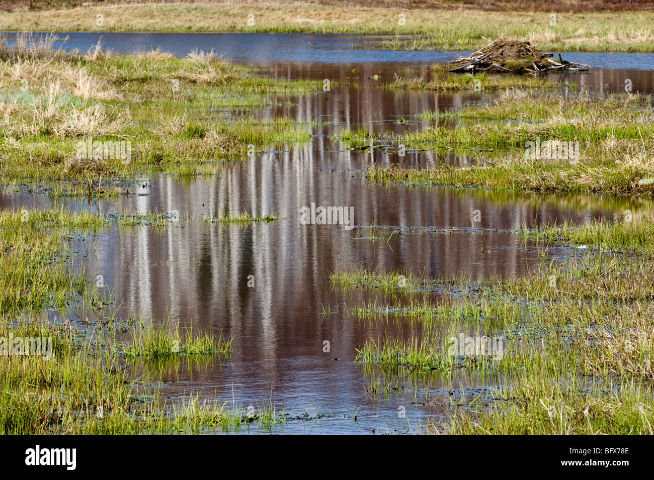 Reflections in beaverpond water channel in early spring, Greater Sudbury, Ontario, Canada - Stock Image