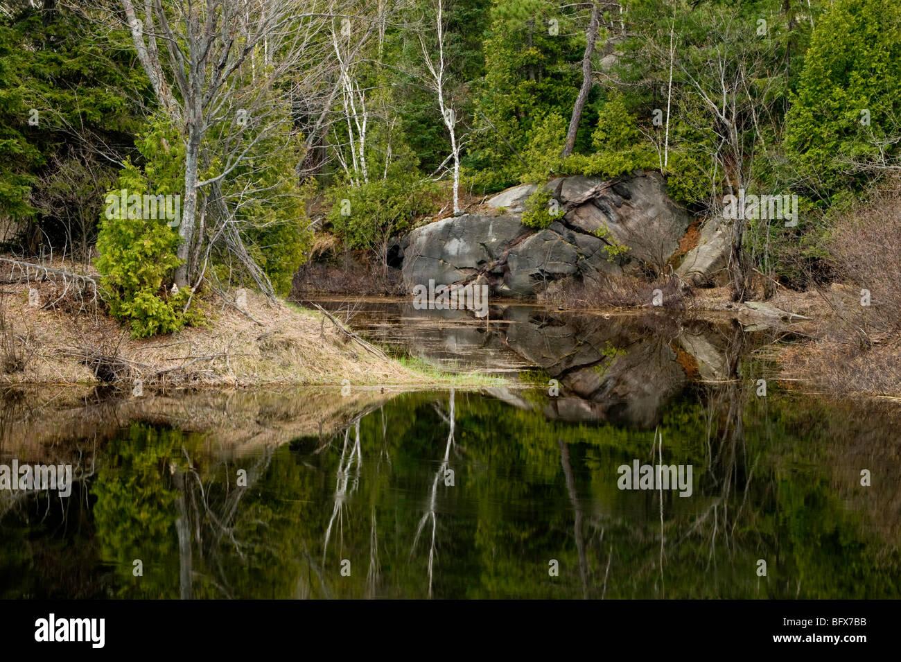 Spring tree reflections in Wanapitei River, Greater Sudbury, Ontario, Canada - Stock Image