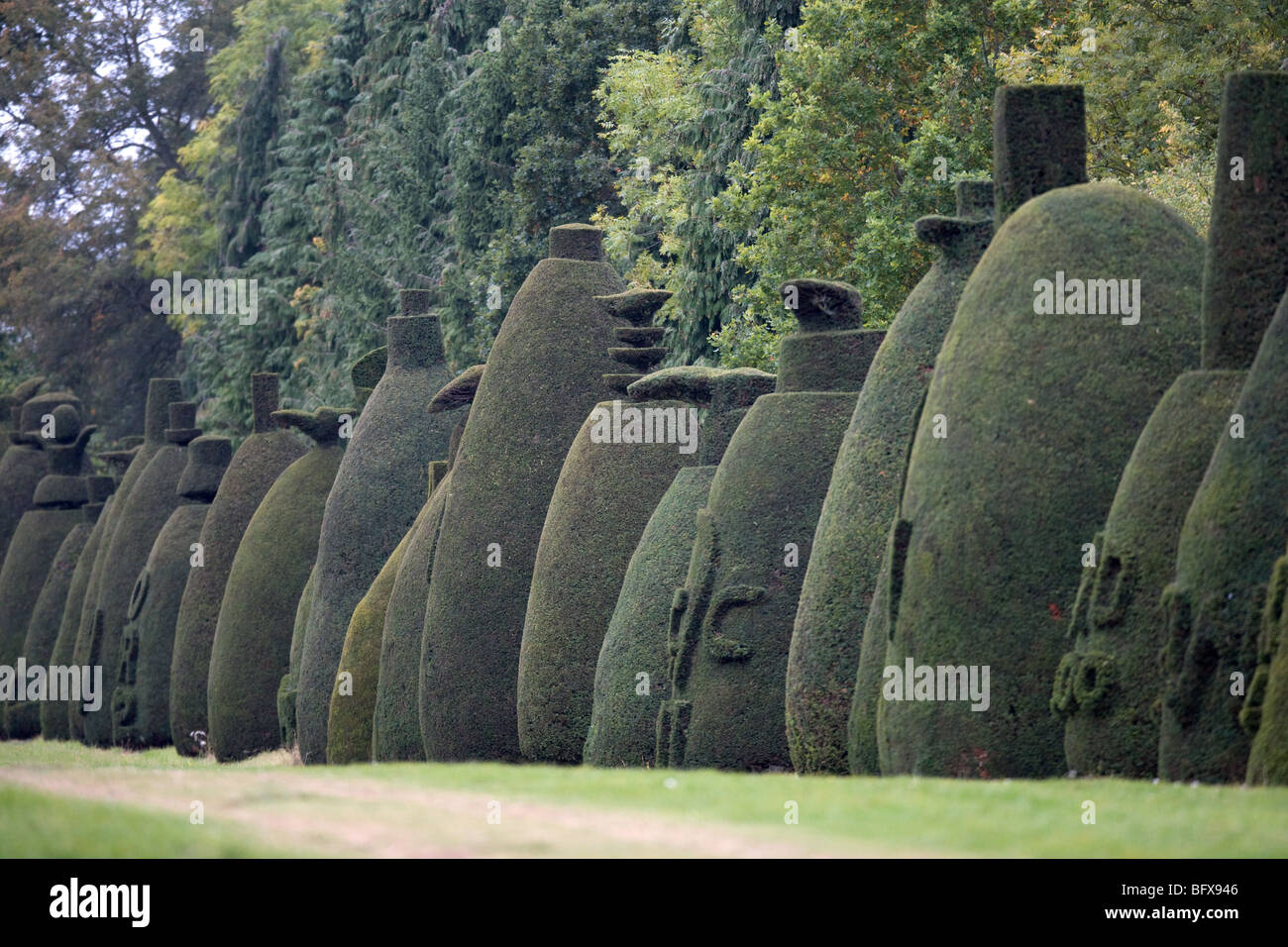 The Yew Tree Avenue at Clipsham,Rutland a collection off 150 clipped yew trees over 200 years old - Stock Image