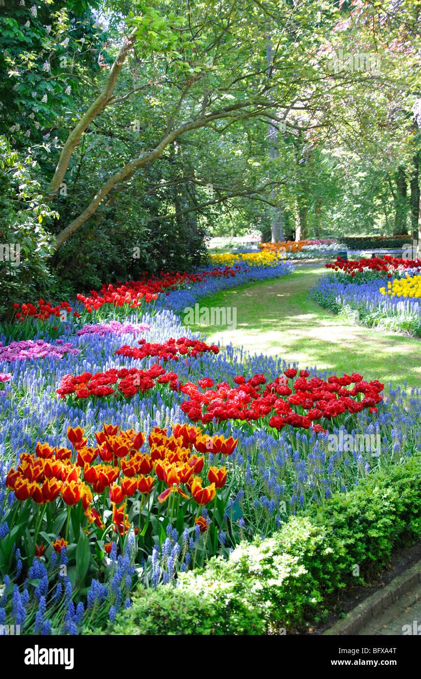 Keukenhof, Netherlands, world's largest flower park - Stock Image
