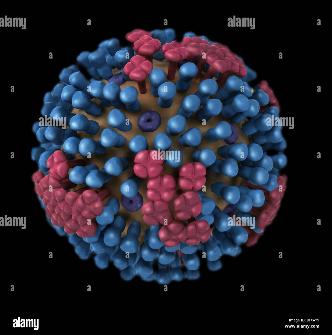 3D graphical representation of a generic influenza virion's ultrastructure. - Stock Image