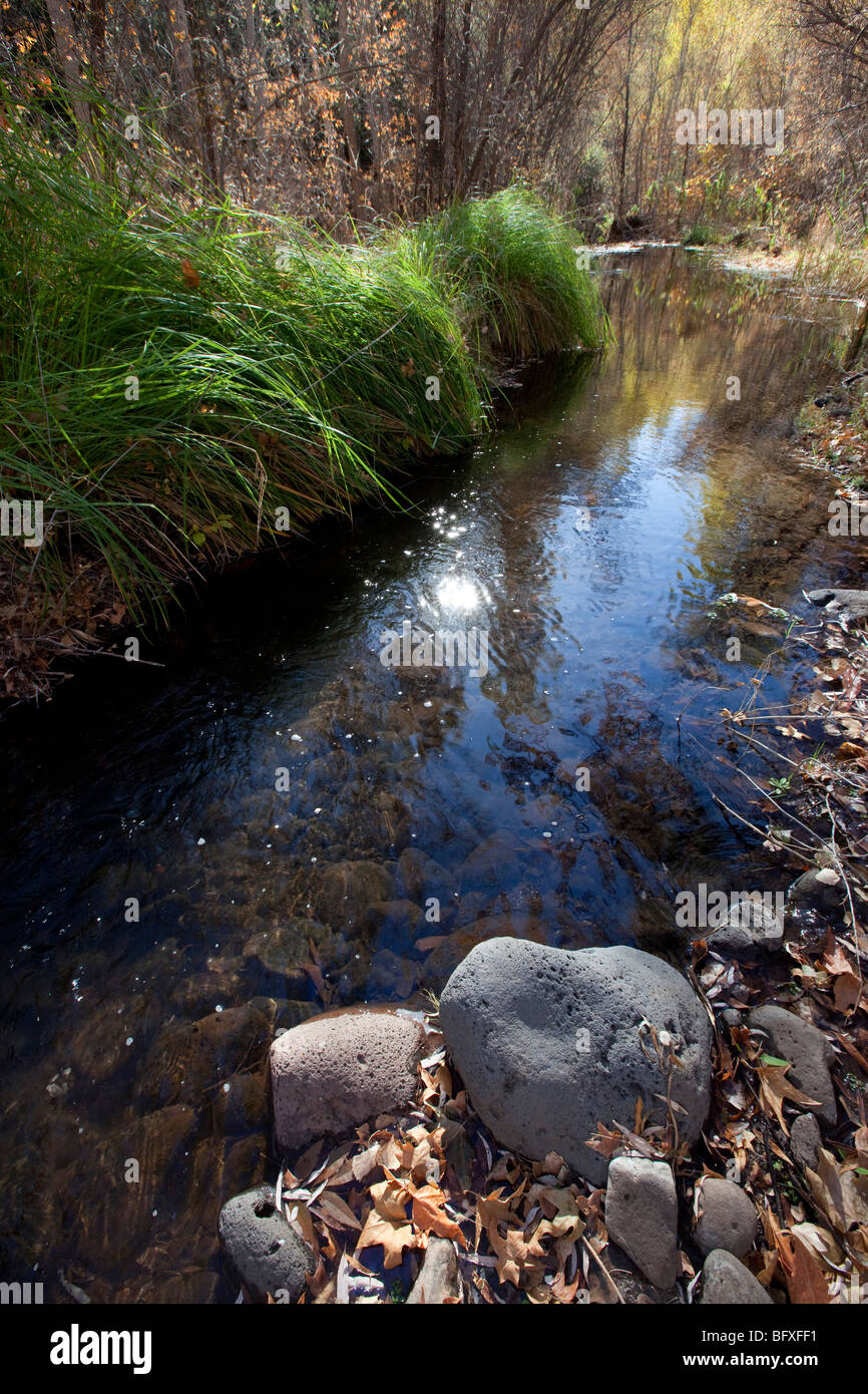Perennial Stream, Muleshoe Ranch Nature Preserve, Arizona - Stock Image