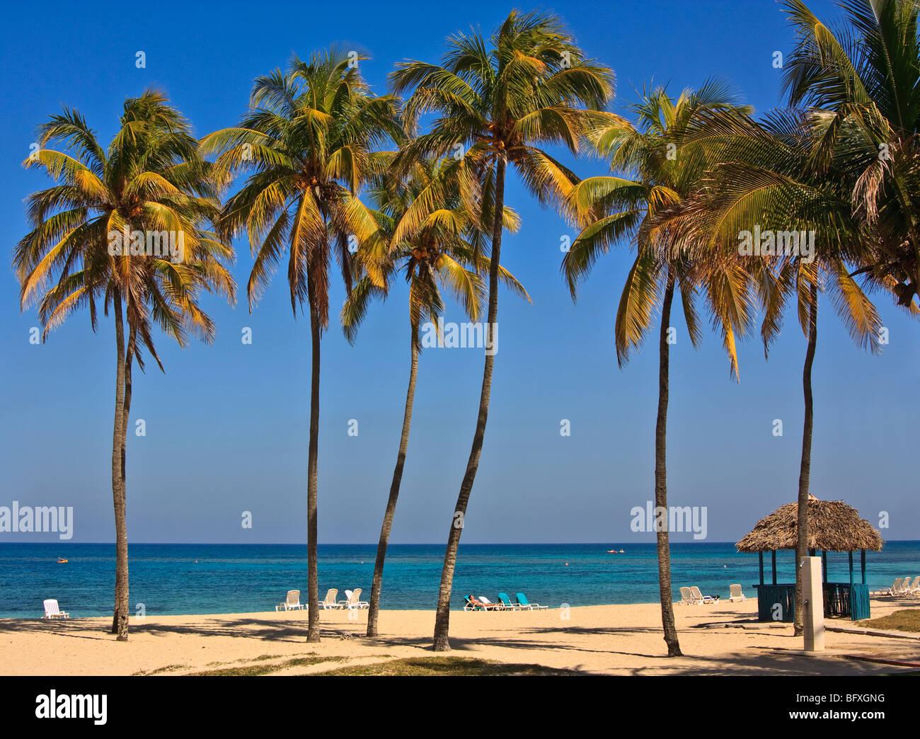 Tall palm trees on a Cuban beach - Stock Image