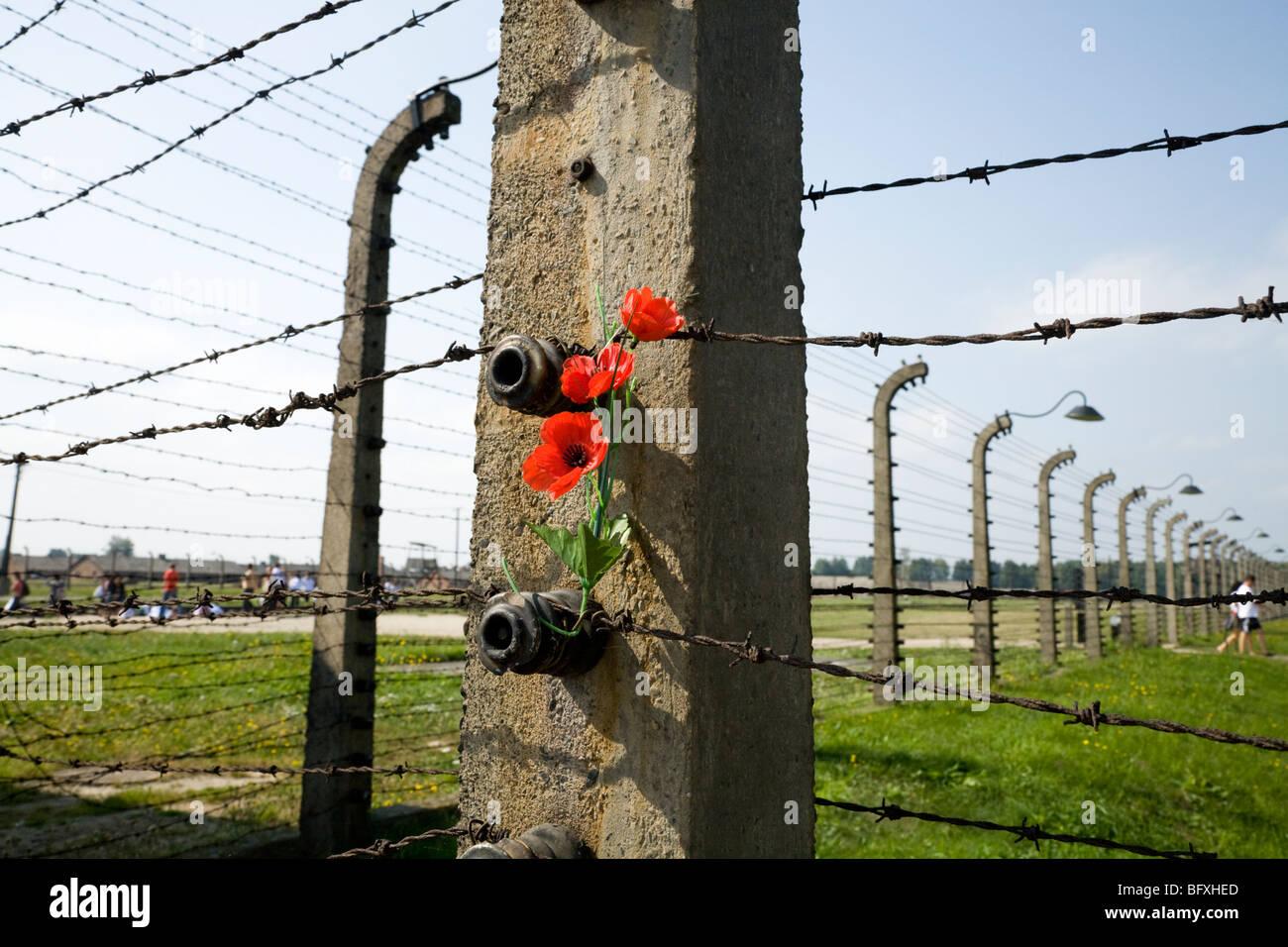 Poppy placed in the barbed wire of the perimeter fence / Birkenau (Auschwitz II Birkenau) Nazi death camp in Oswiecim, - Stock Image