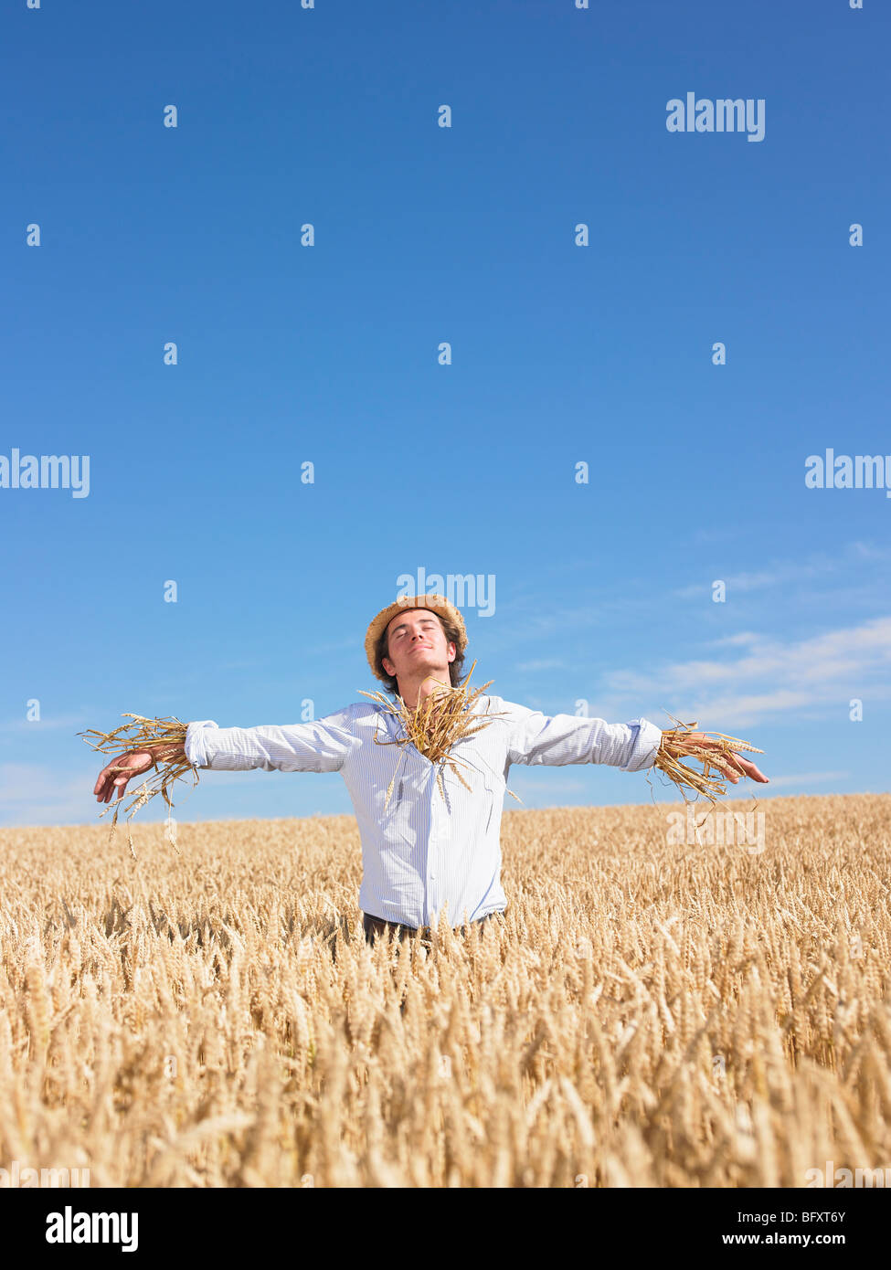 scarecrow in wheat field - Stock Image
