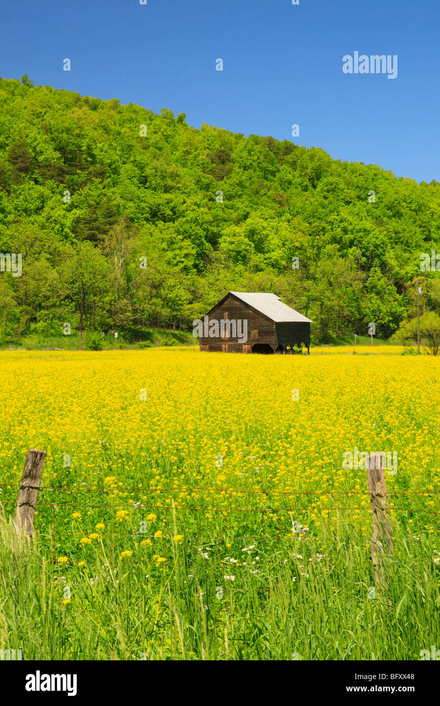 Yellow Flowers In Field Virginia Stock Photos Yellow Flowers In