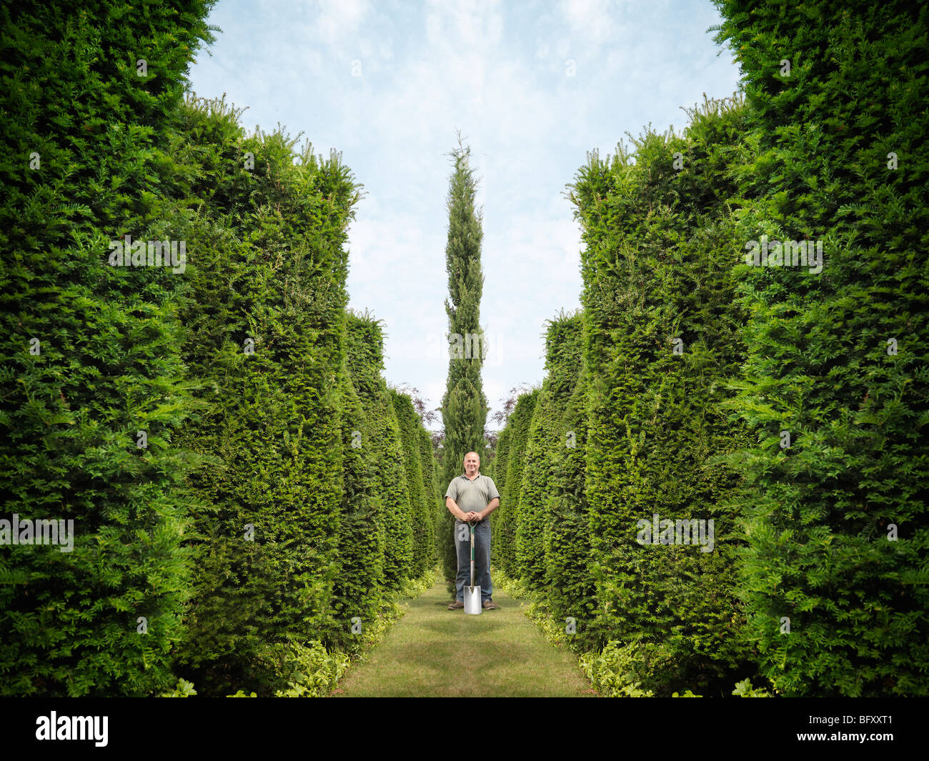 Gardener With Spade And Evergreen Trees - Stock Image