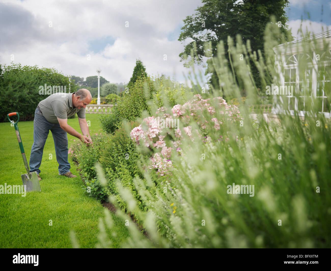Gardener Tending Border - Stock Image