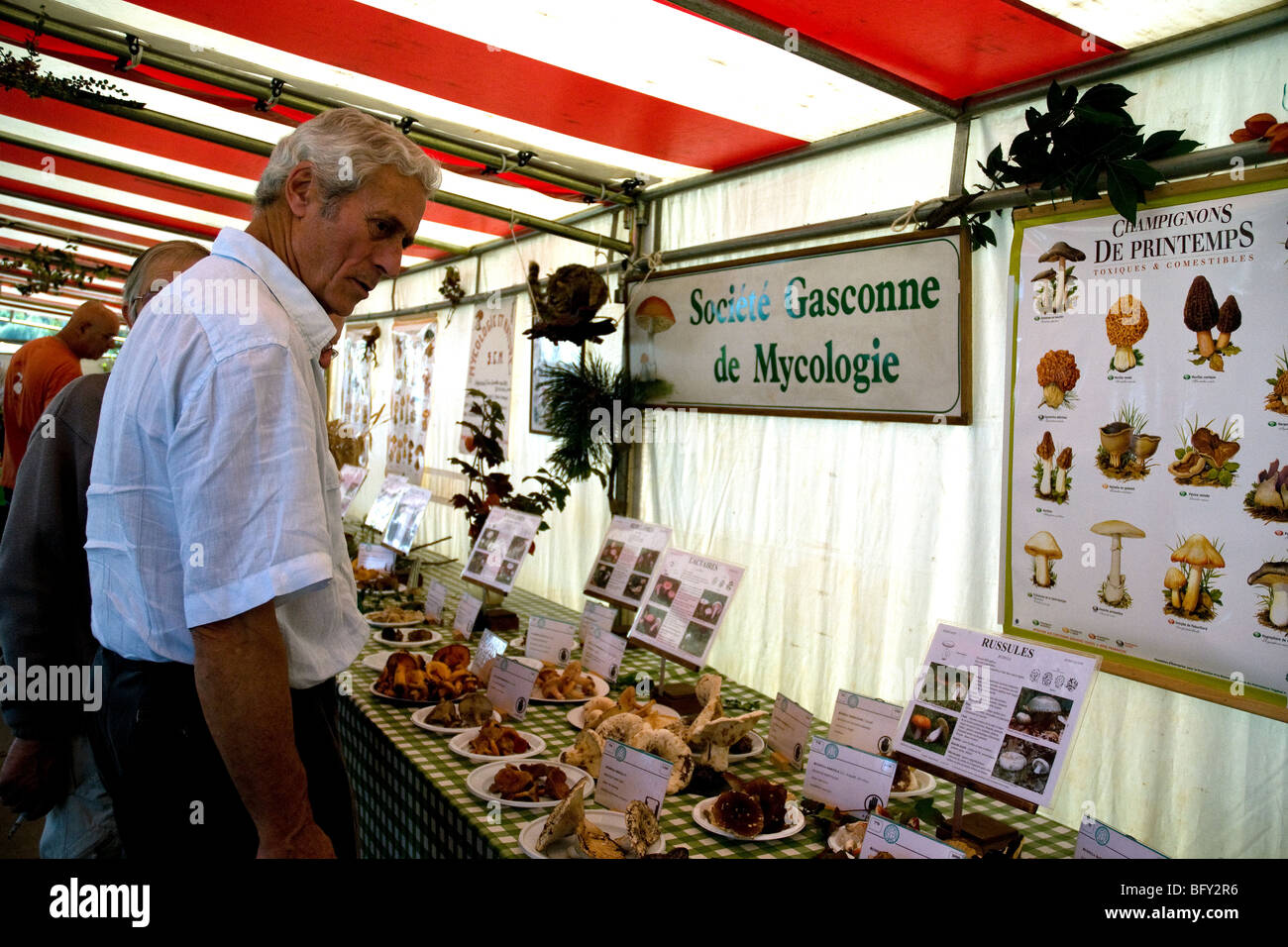Mycology, or mushroom, enthusiasts at a stand displaying many varieties at a Gascon agricultural fair in Auch - Stock Image