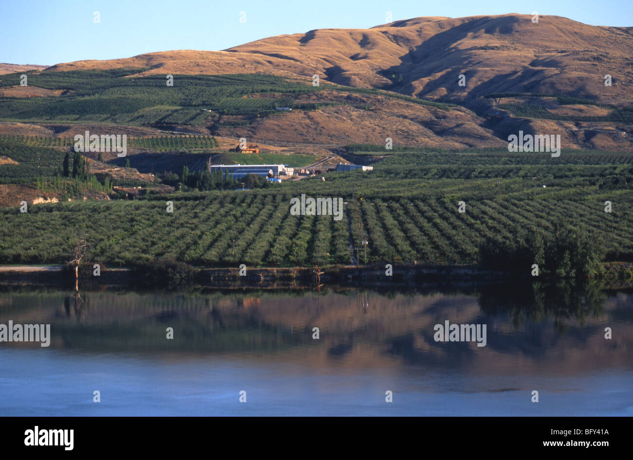 An apple orchard along the Okanogan River near Omak in Washington State. Stock Photo