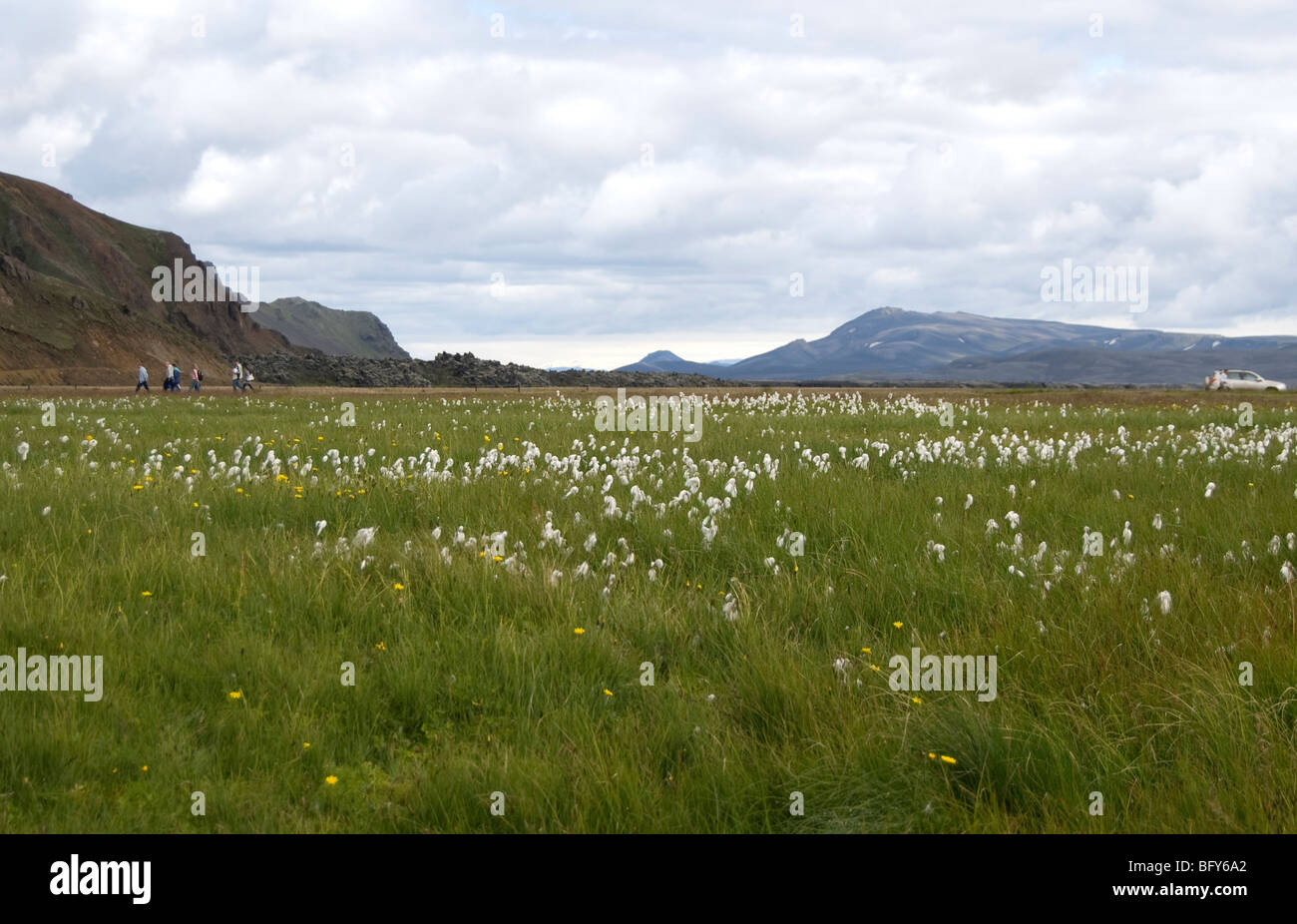 meadow, Landmannalaugar, Iceland highlands. - Stock Image