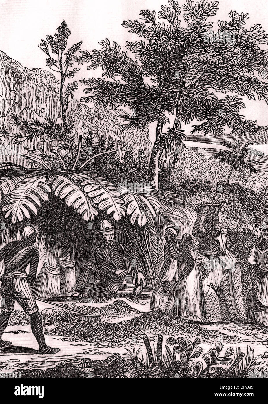 SLAVES on a Brazilian coffee plantation early 1800s - Stock Image