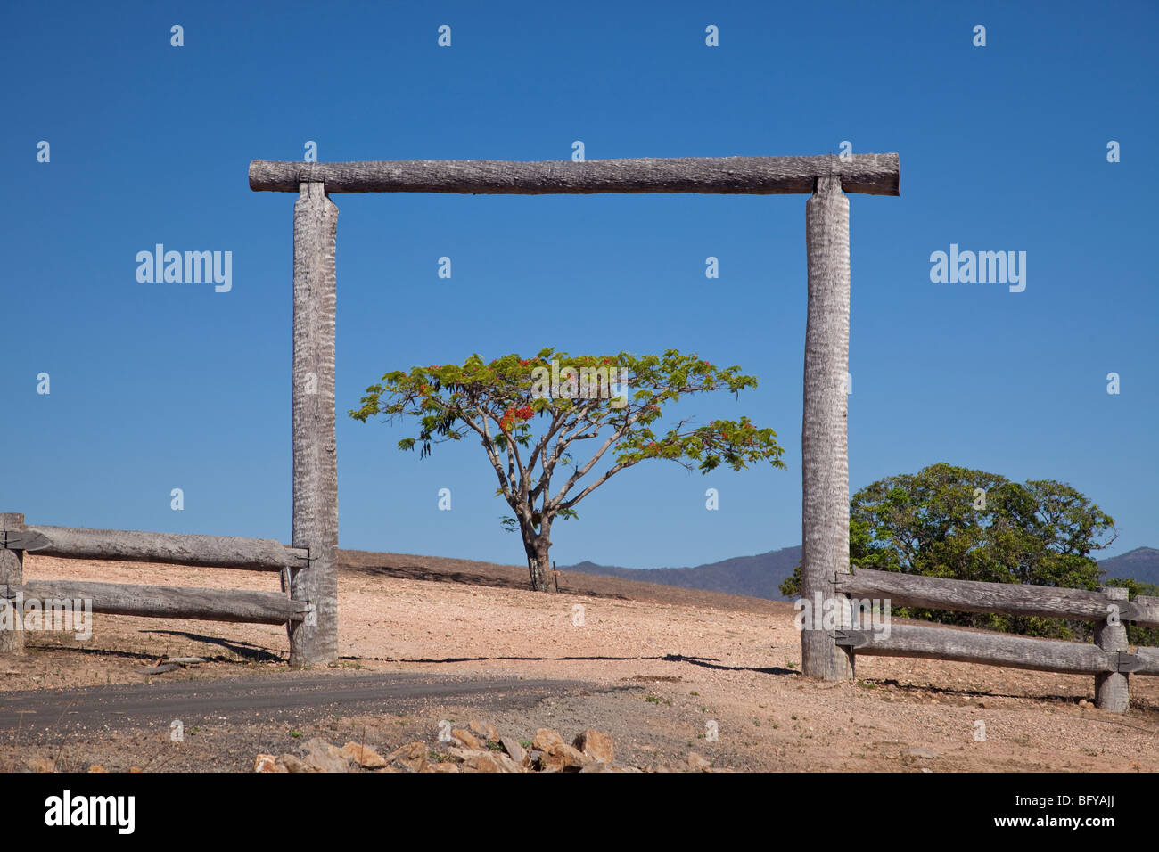 Springvale cattle station, and flowering Poinciana tree, near Cooktown, Queensland, Australia - Stock Image