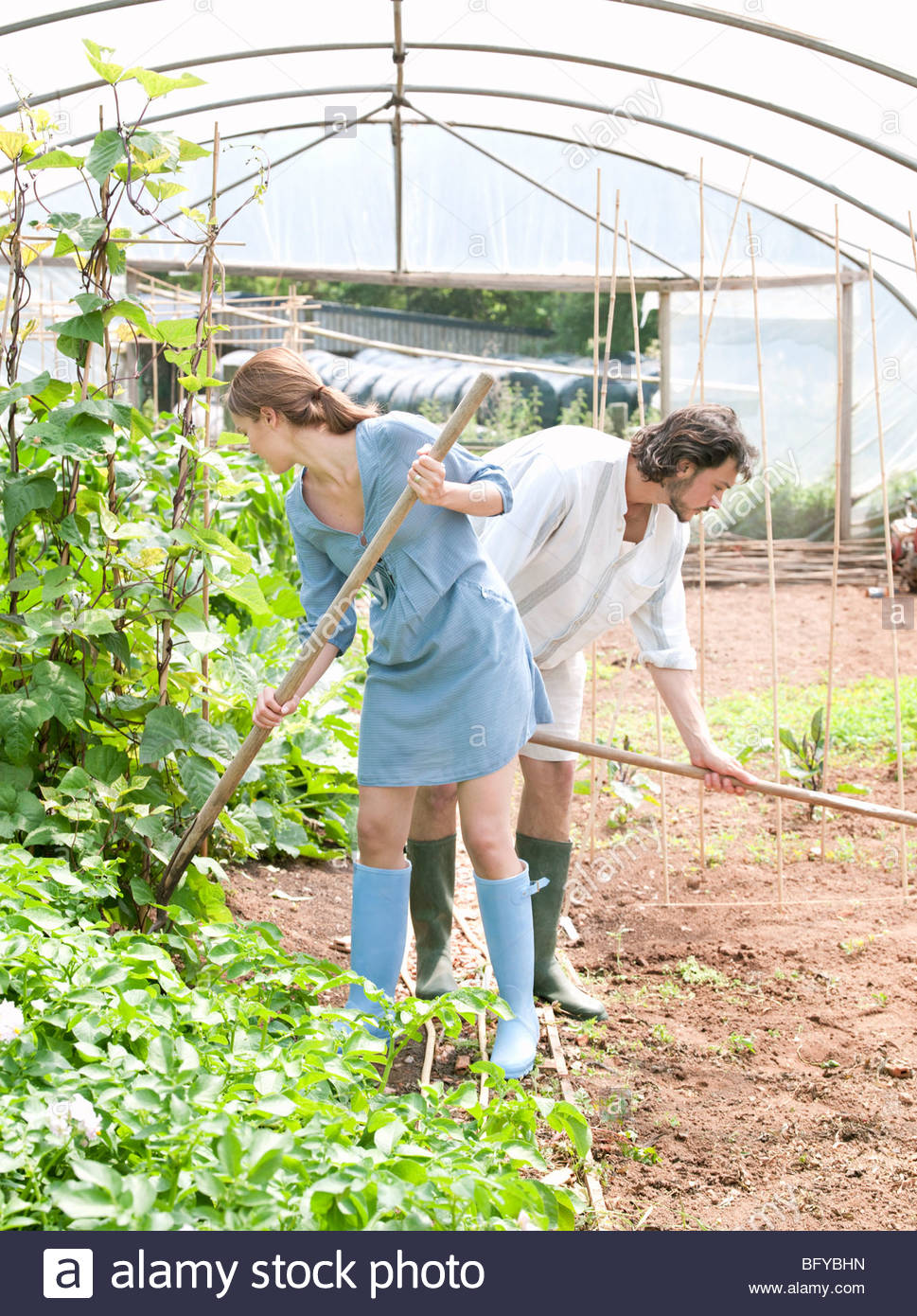 Man and woman gardening in greenhouse - Stock Image