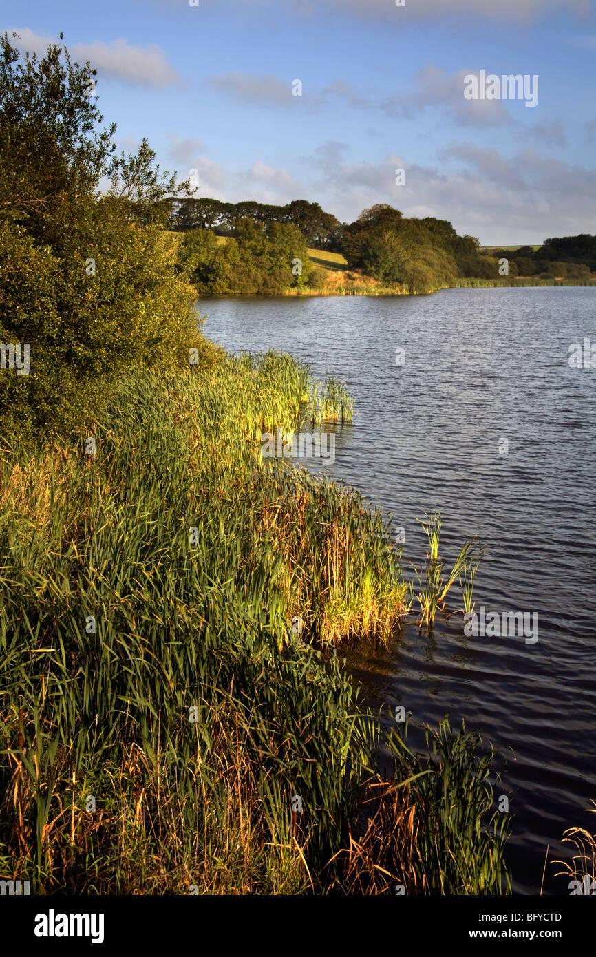 Lower Tamar Lake; Cornwall side Stock Photo