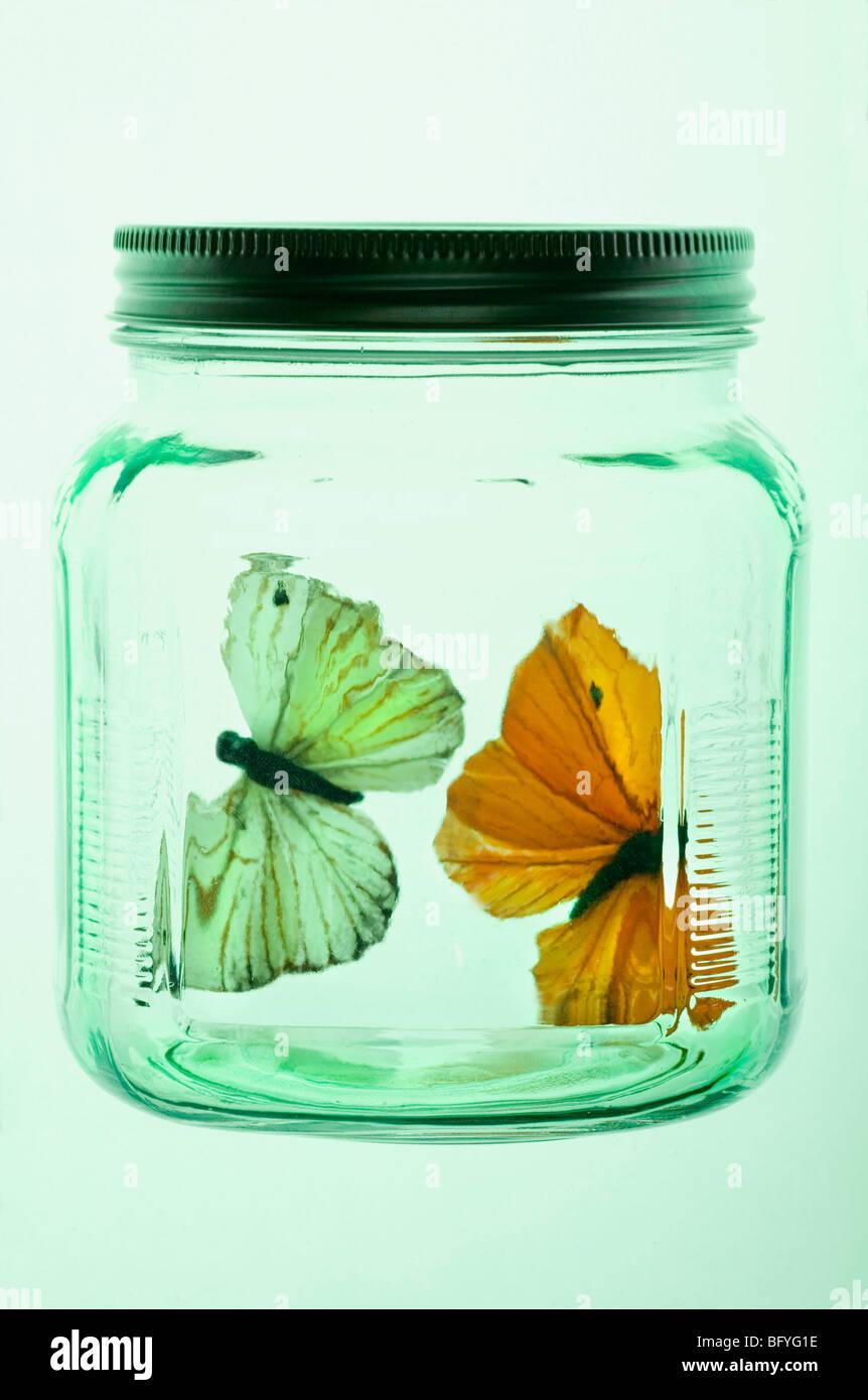 Two butterflies in glass jar Stock Photo