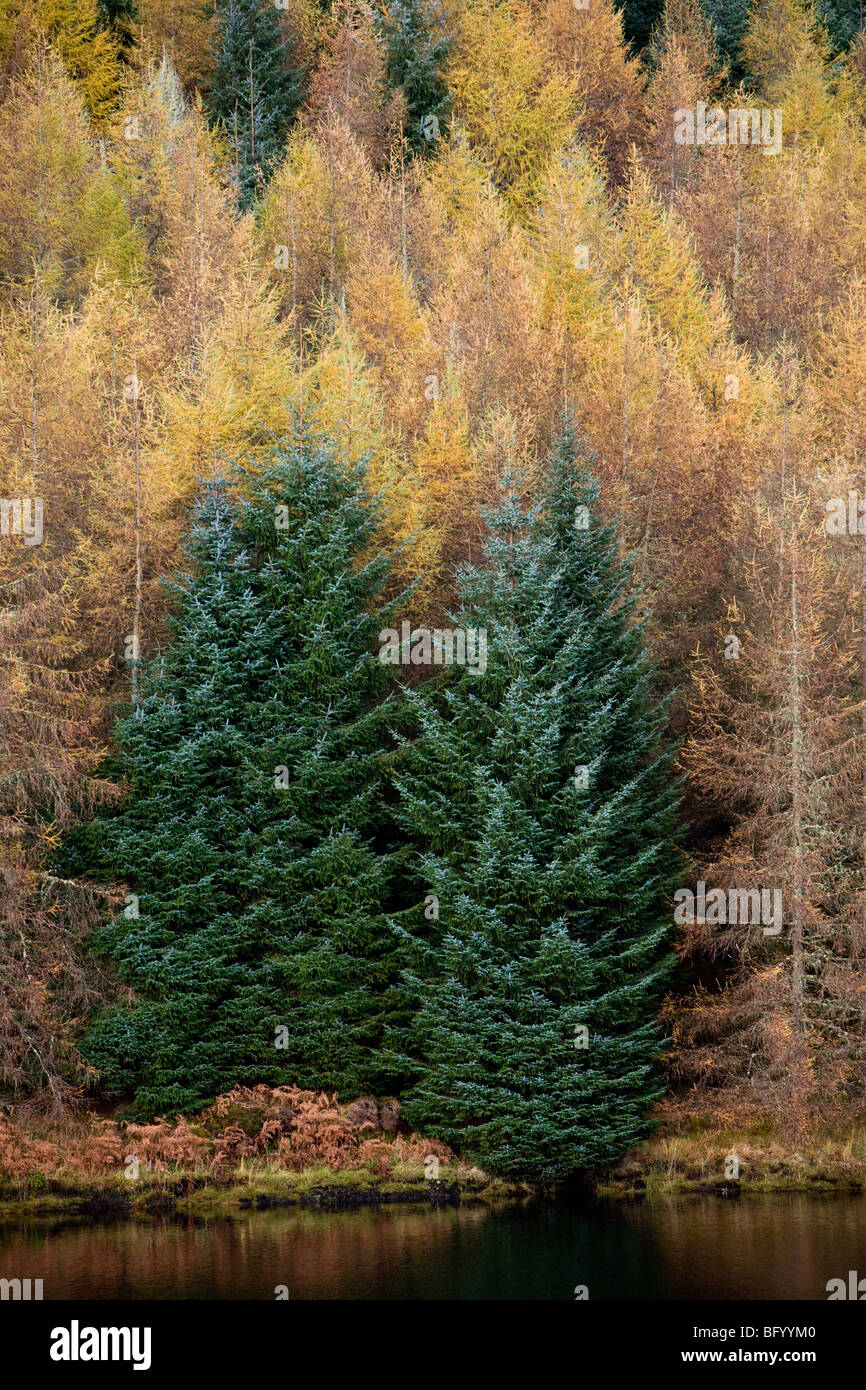 Forestation on the West Shore of Oude Dam, Argyll & Bute, Scotland Stock Photo